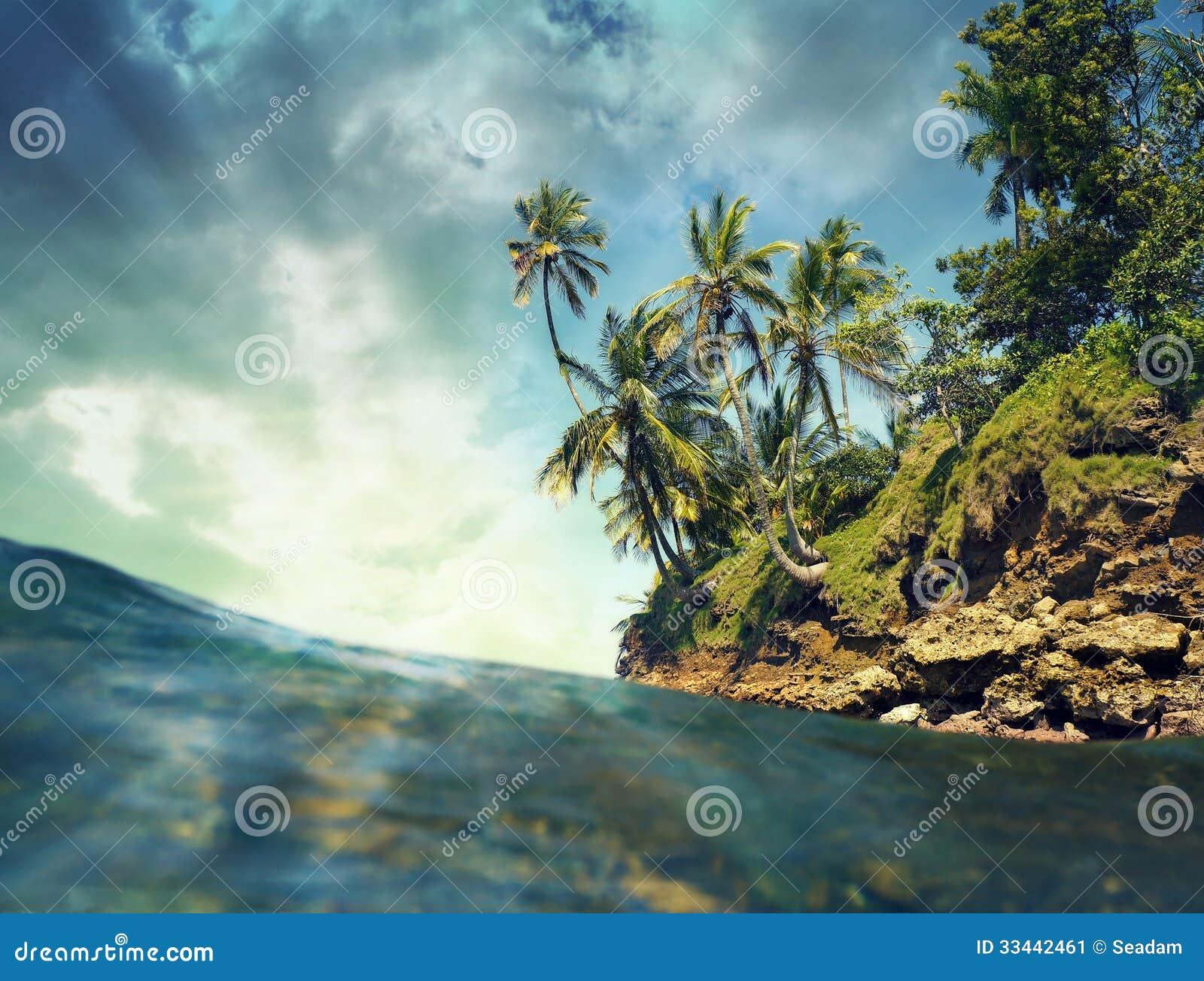 Arbres de noix de coco au dessus de la mer image stock image 33442461 - Arbre noix de coco ...
