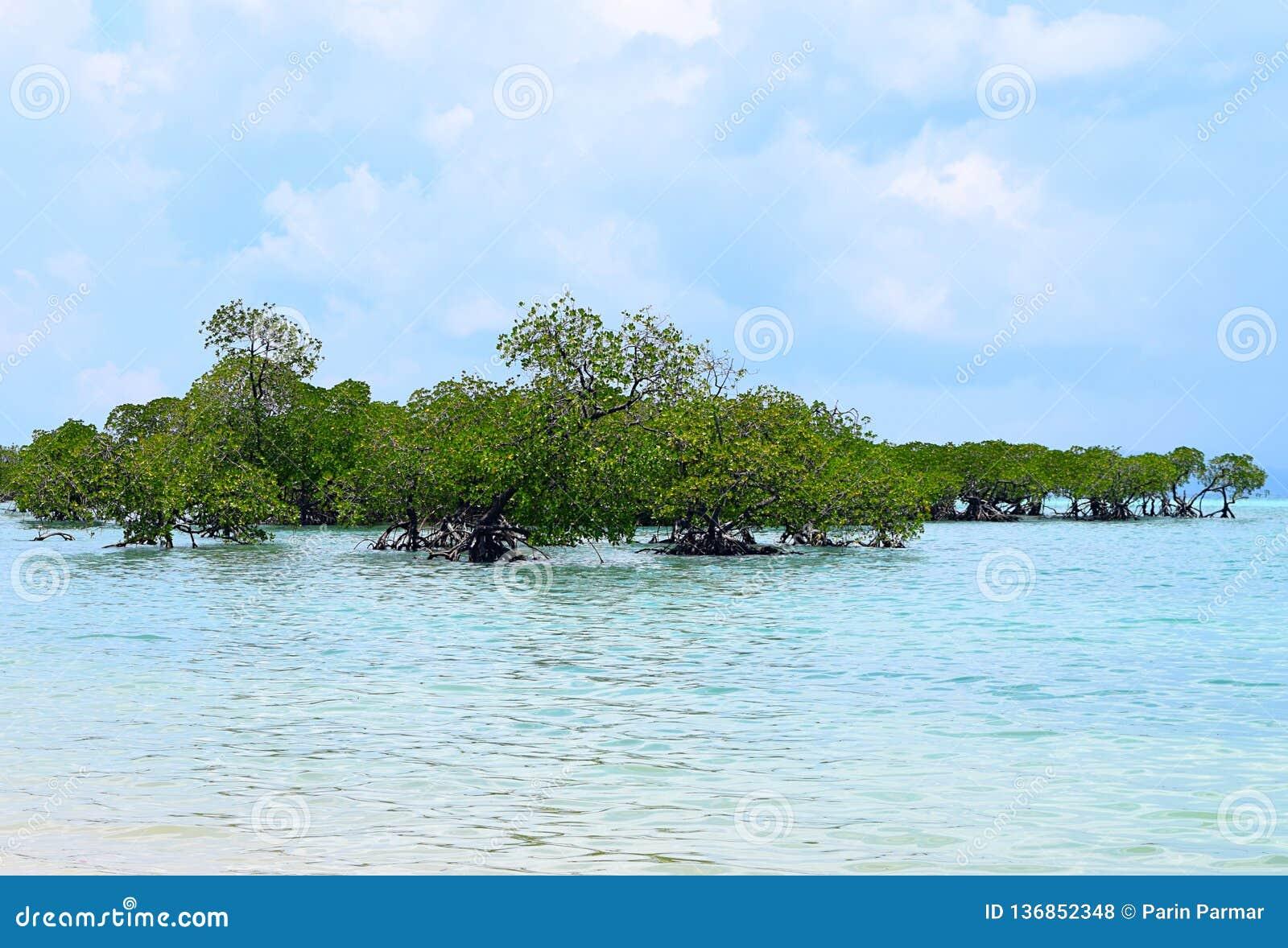 Arbres de pal?tuvier dans l eau de Crystal Clear Transparent Blue Sea avec le ciel nuageux - Neil Island, ?les d Andaman Nicobar,
