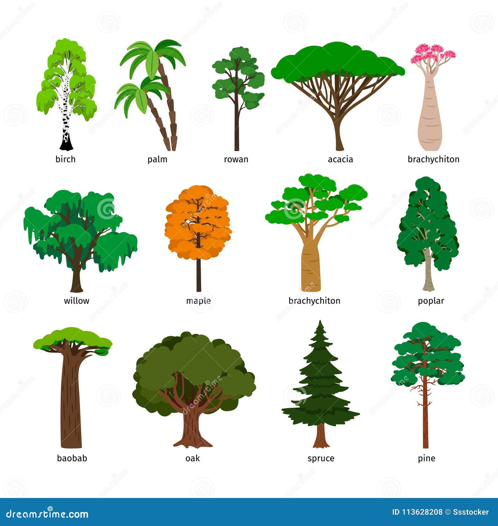arbres de vecteur l 39 arbre forestier a plac avec les. Black Bedroom Furniture Sets. Home Design Ideas