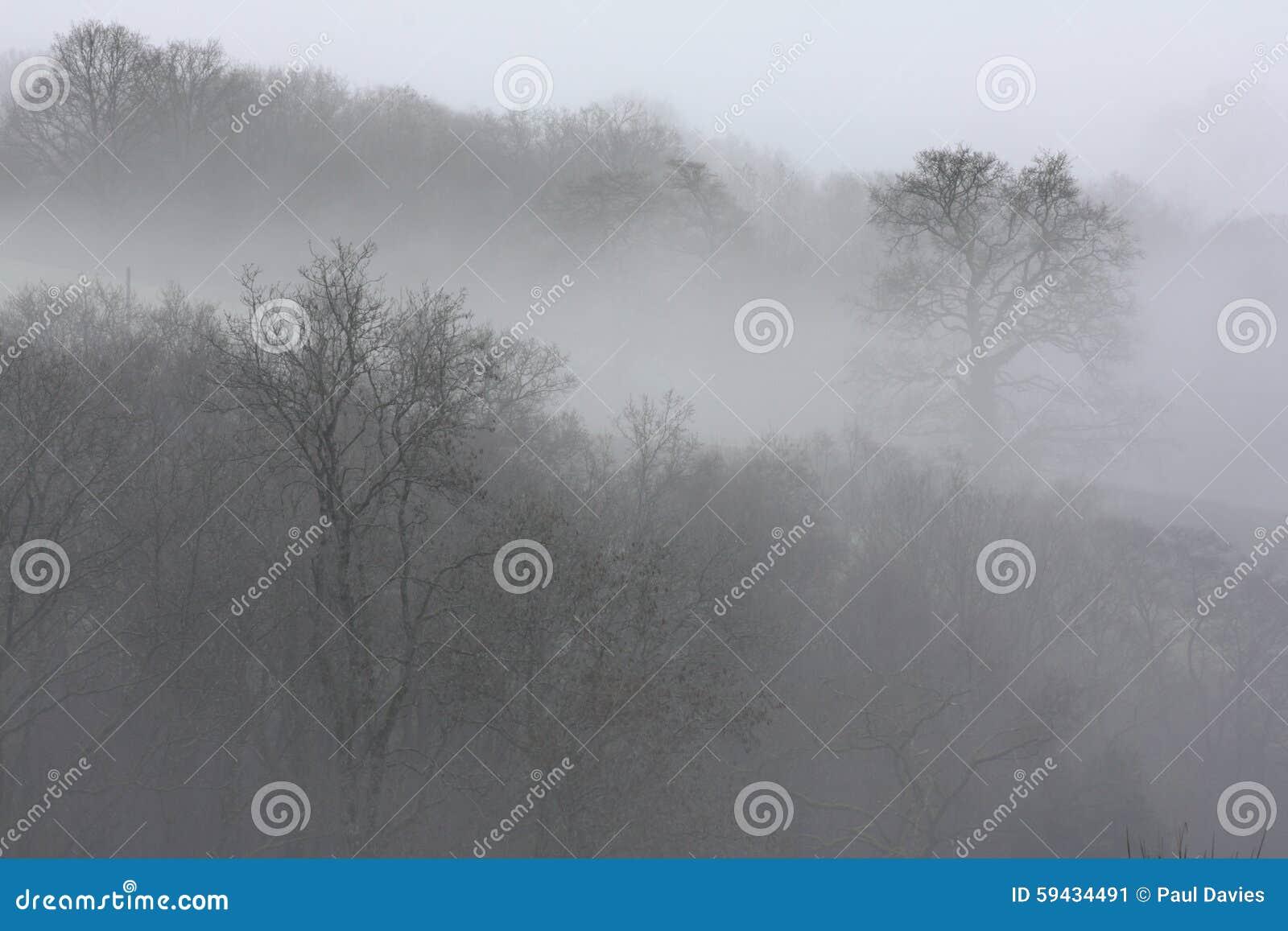 Arbres en brouillard