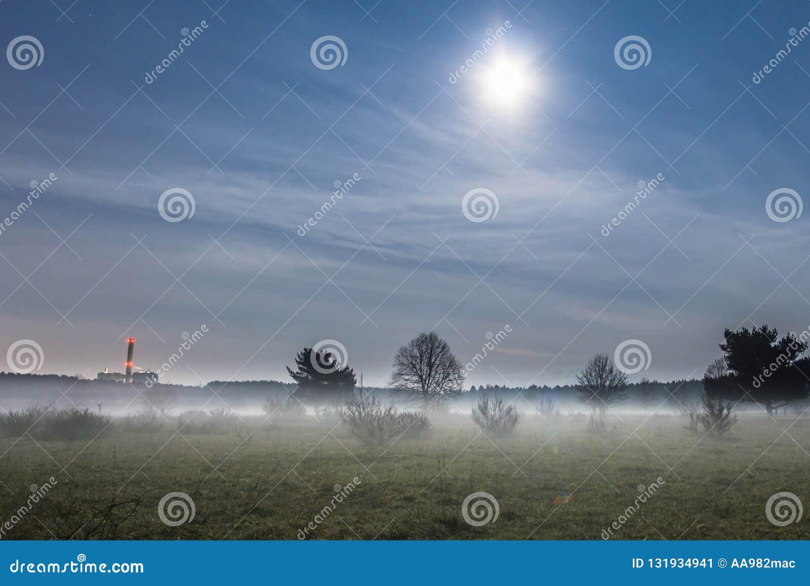 Arbres en brouillard sous la pleine lune