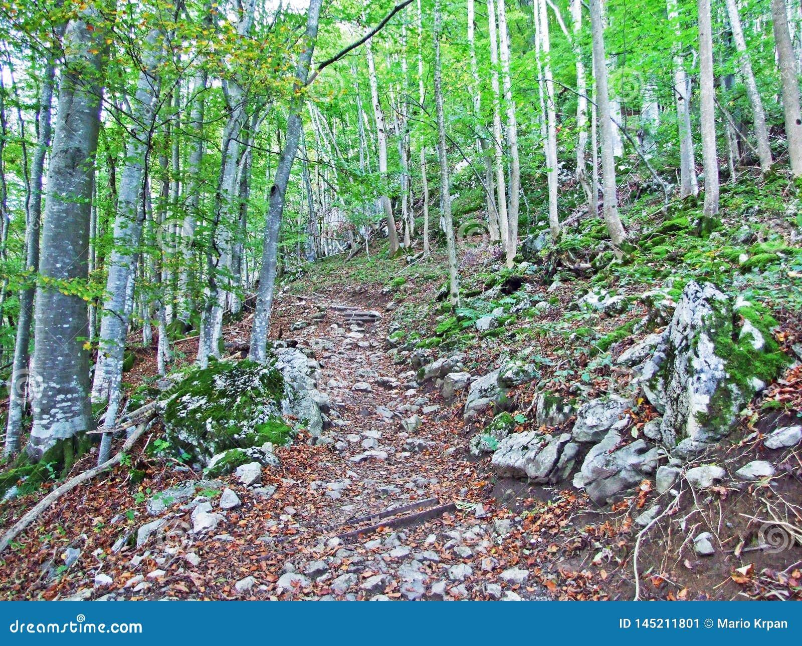 Arbres et forêts à feuilles caduques dans l automne tôt dans la gamme de montagne d Alpstein et dans la région d Appenzellerl