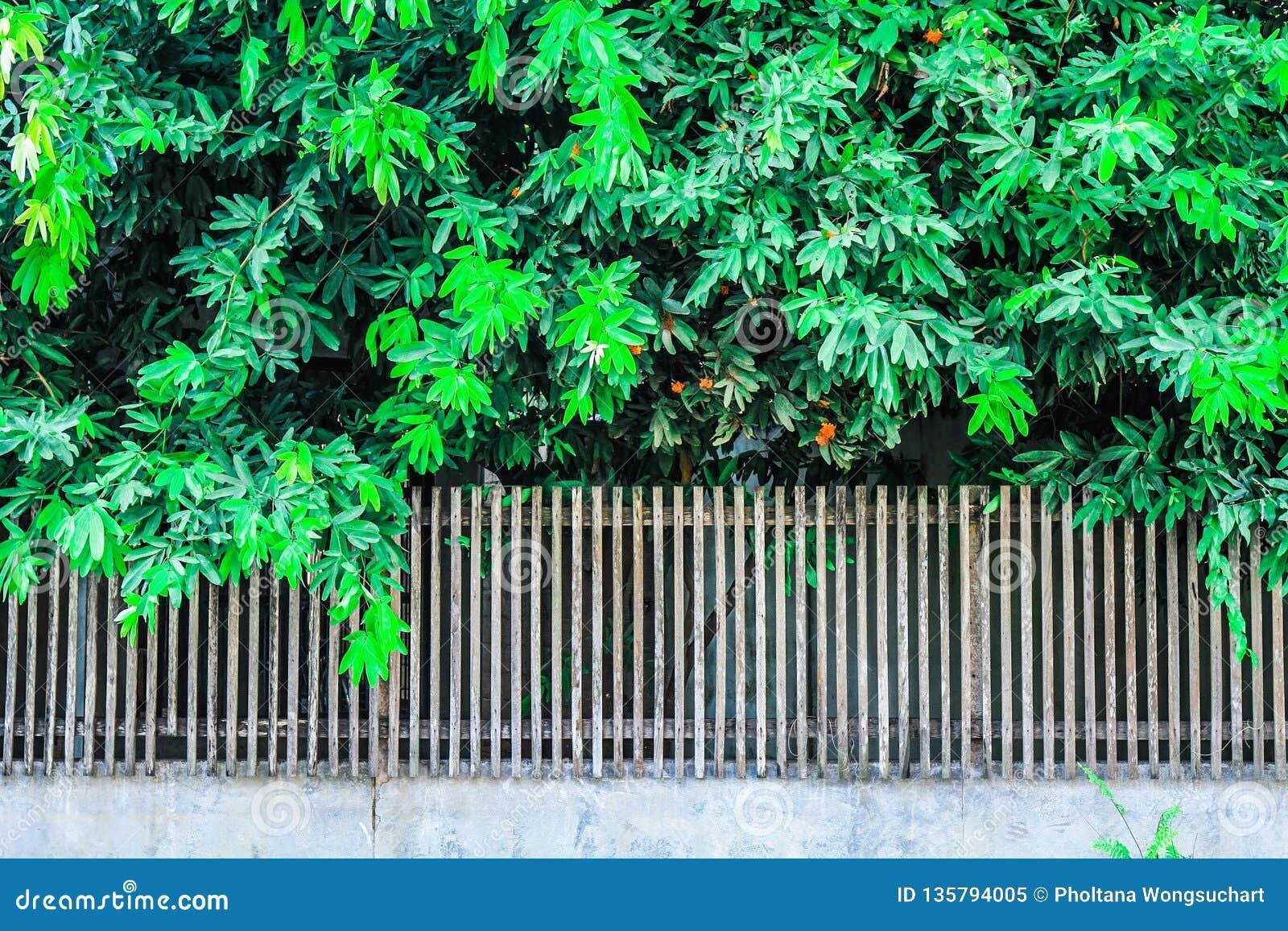 Arbres et jardins dans la barrière