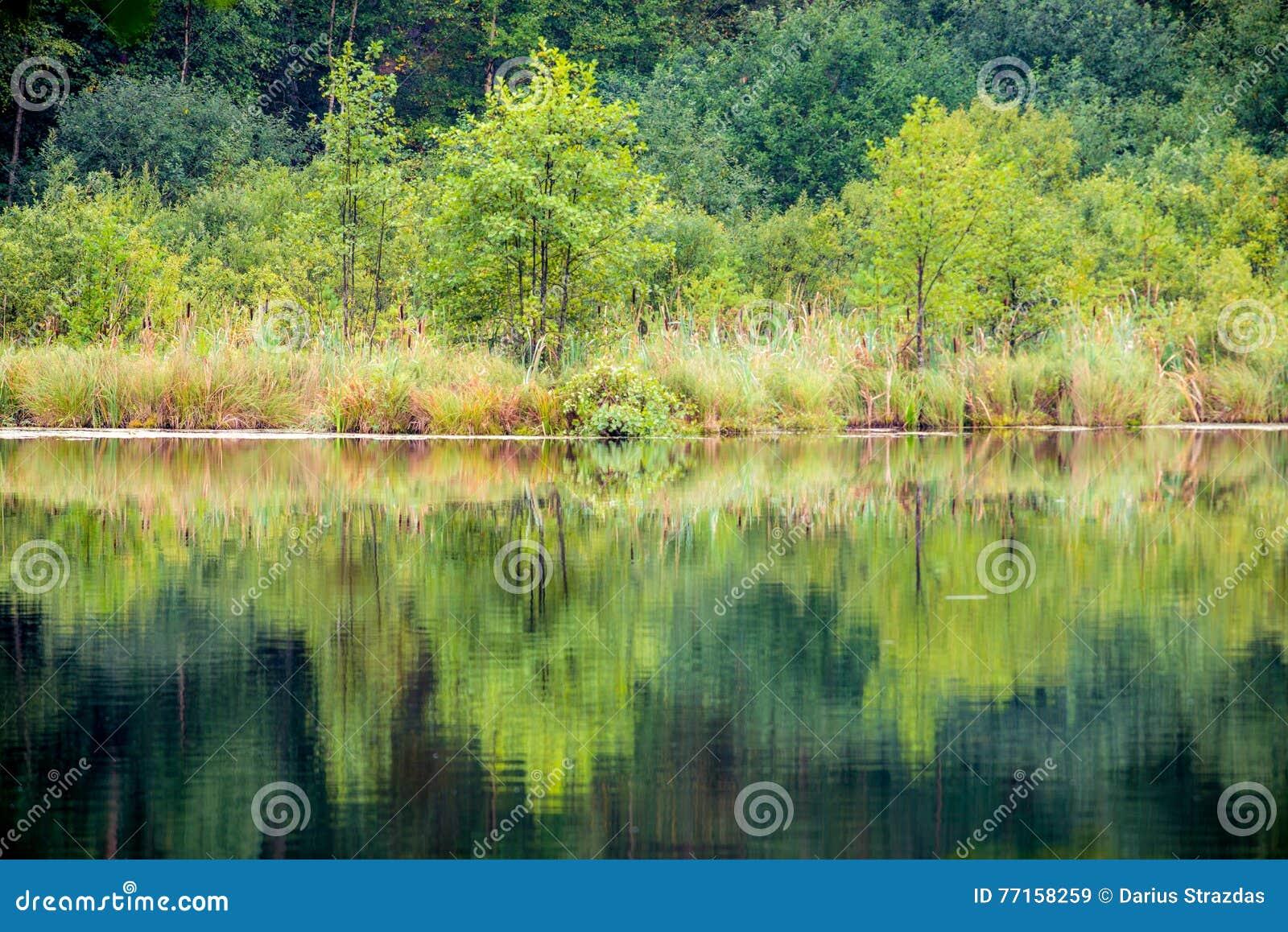 Arbres et réflexion de lac