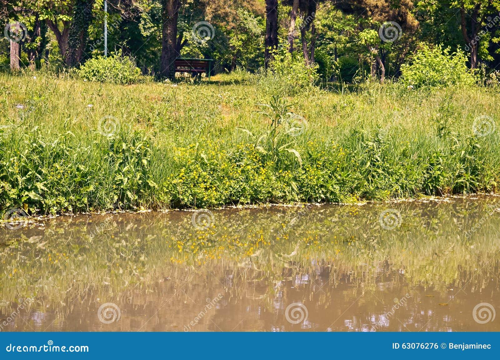 Download Arbres Et Une Petite Rivière Photo stock - Image du scène, vert: 63076276