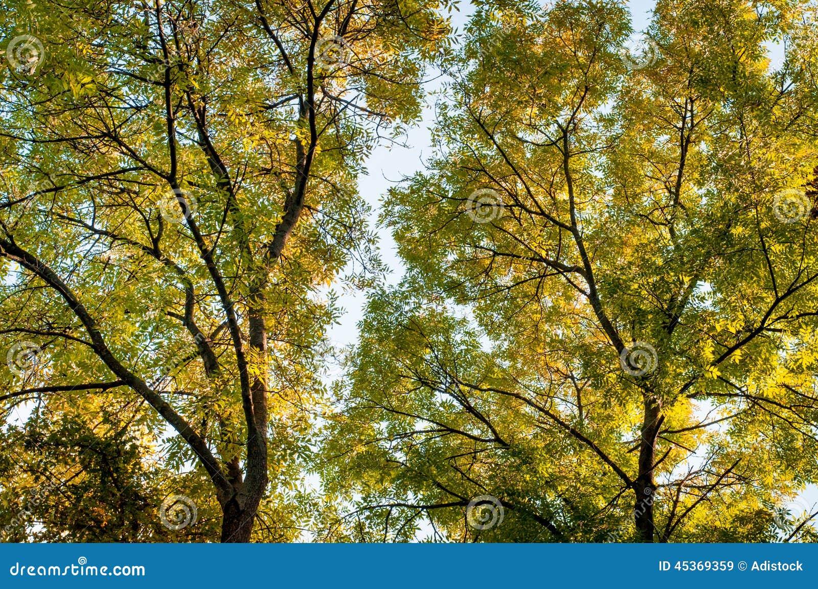 Arbres forestiers à l arrière-plan d automne