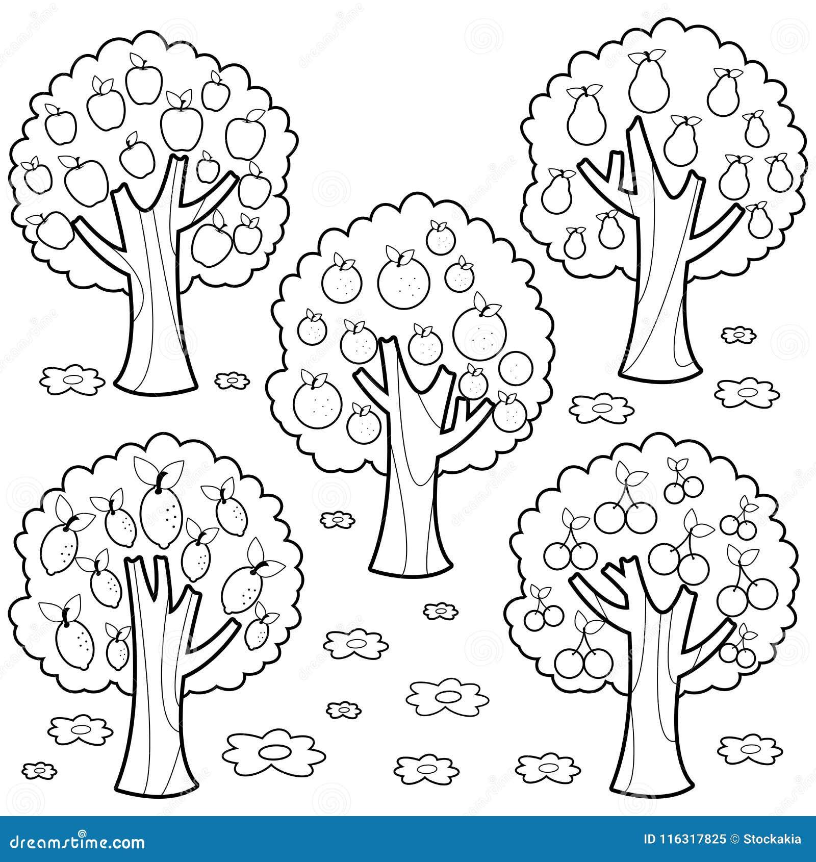 Coloriage Arbre Pommier.Arbres Fruitiers Page Noire Et Blanche De Livre De Coloriage