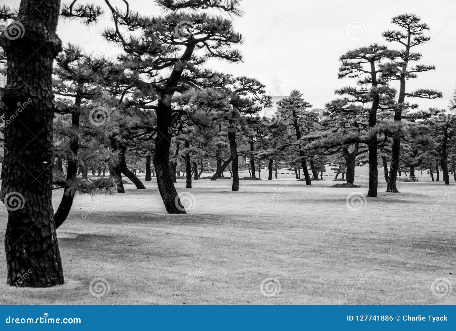 Arbres japonais - Wabi Sabi Ki - secteur de palais de Tokyo
