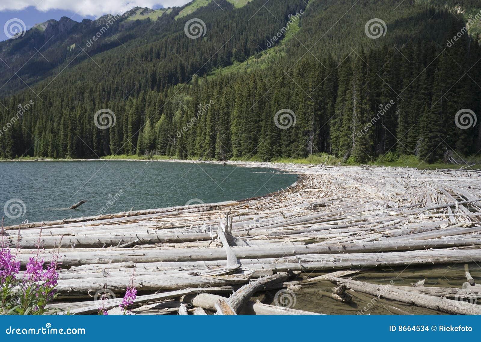 Arbres morts de lac de duffey de crique de cayoosh