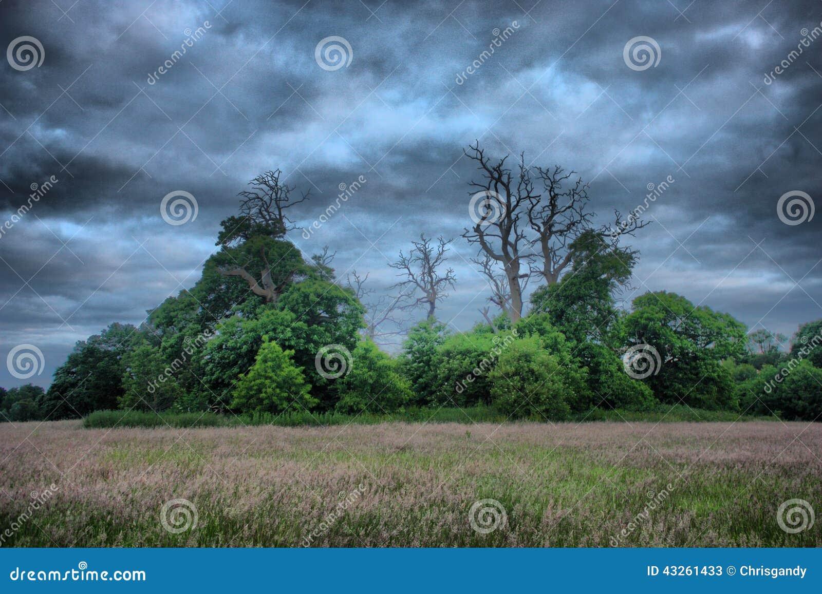 Arbres morts en silhouette contre un ciel gris