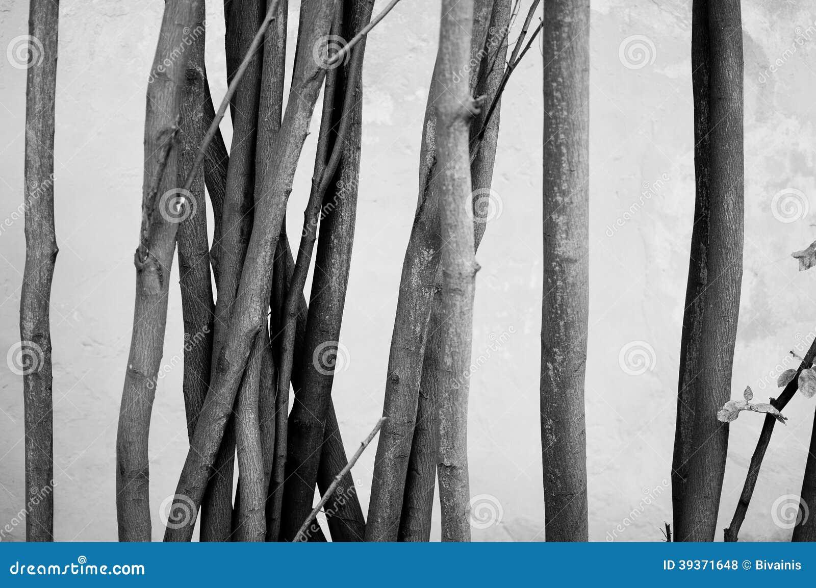 Arbres noirs et blancs minimaux