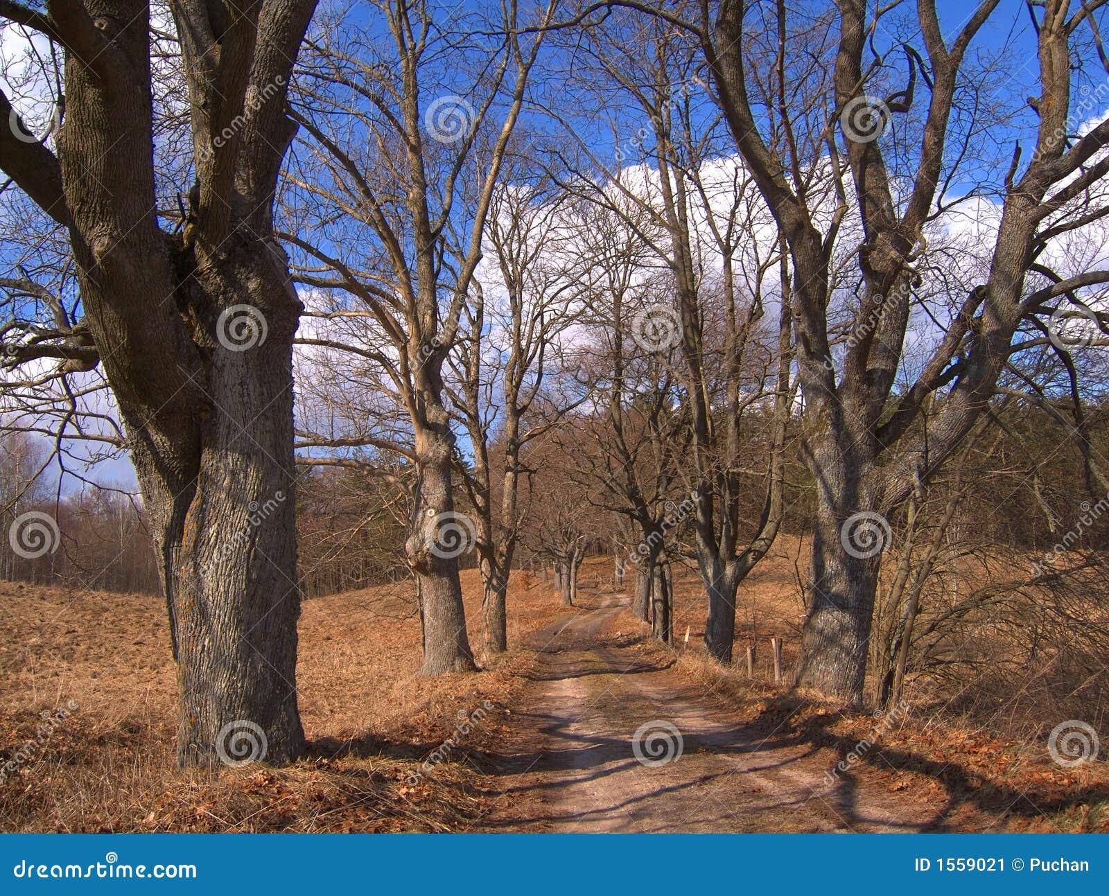 Arbres sans feuilles image stock image du ressort marche - Arbres sans feuilles ...