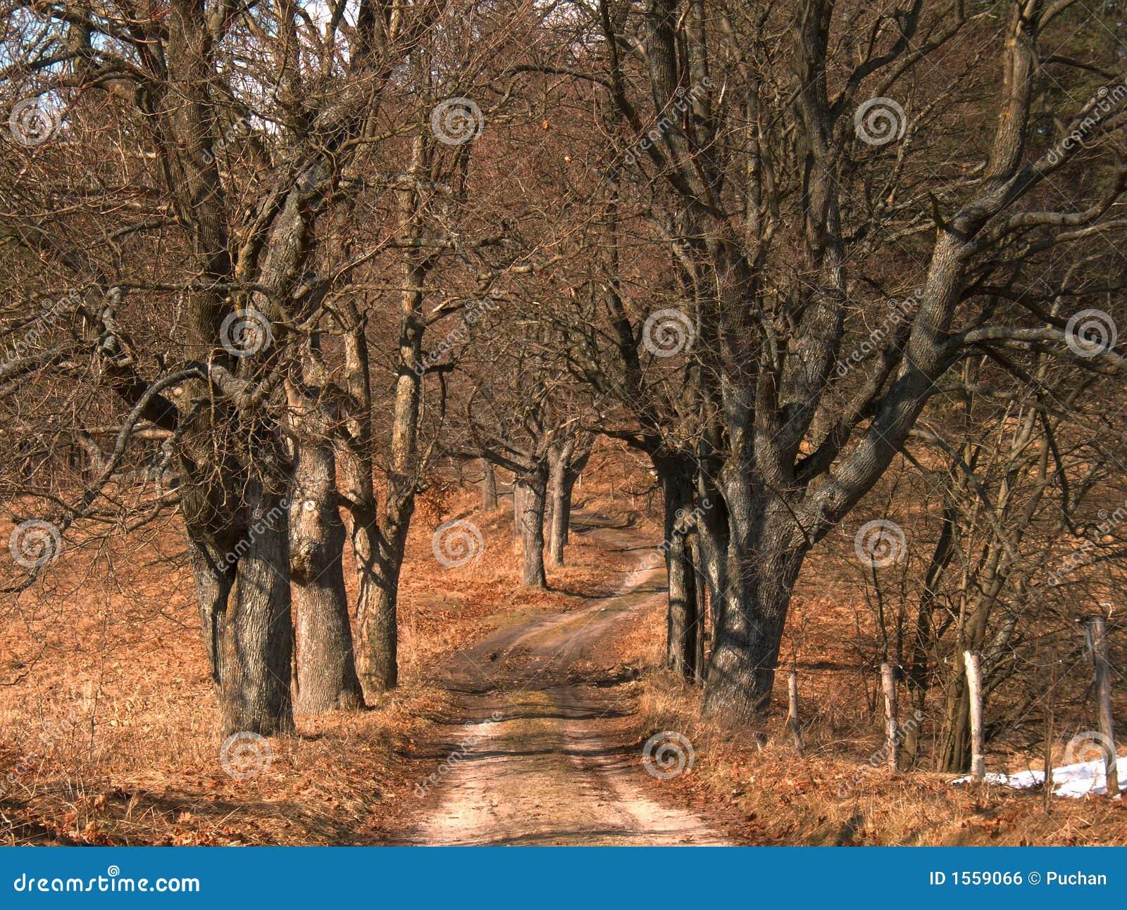 Arbres sans feuilles photo stock image du ressort route - Arbres sans feuilles ...
