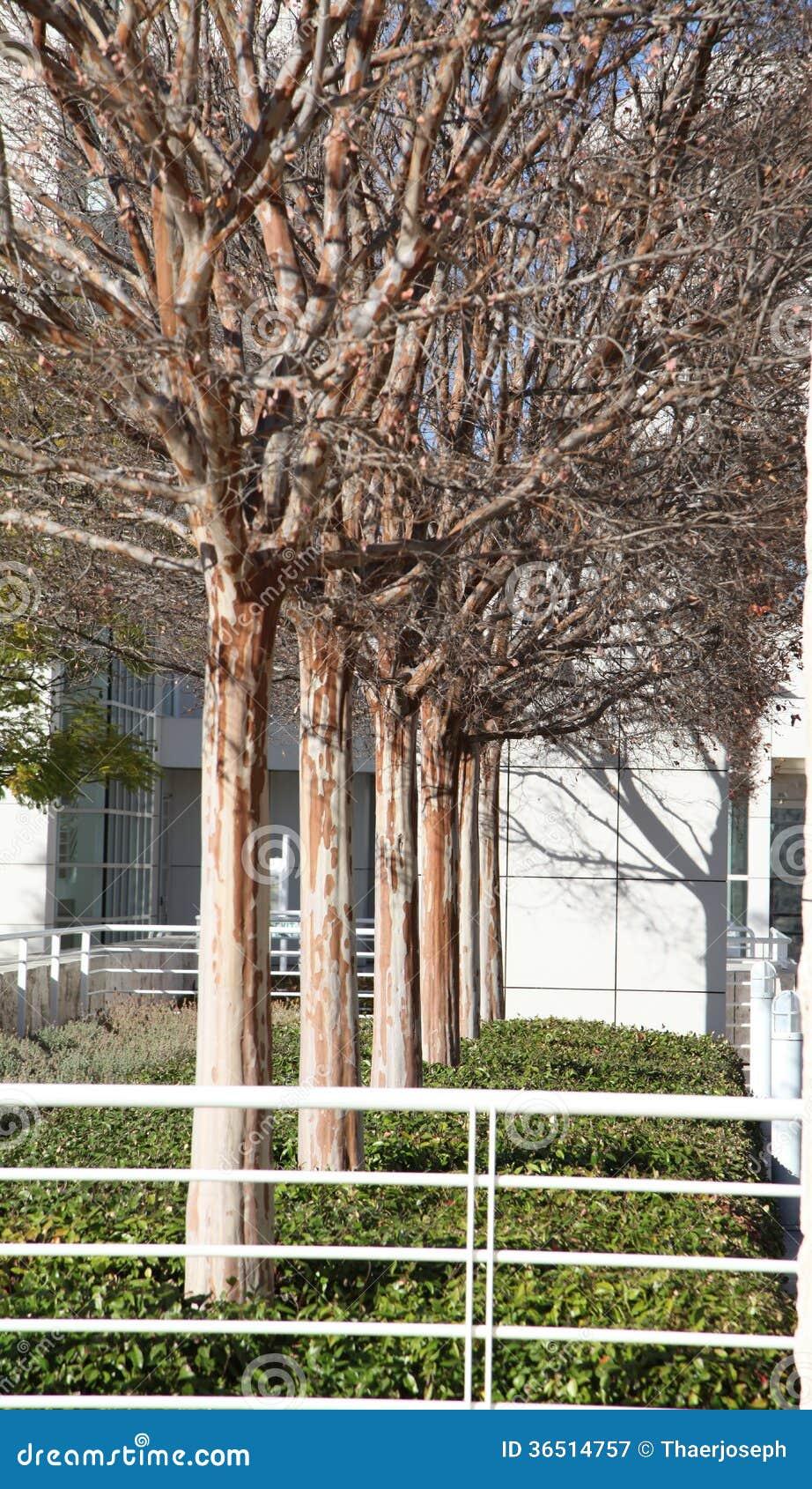 Arbres sans feuilles dans la ligne