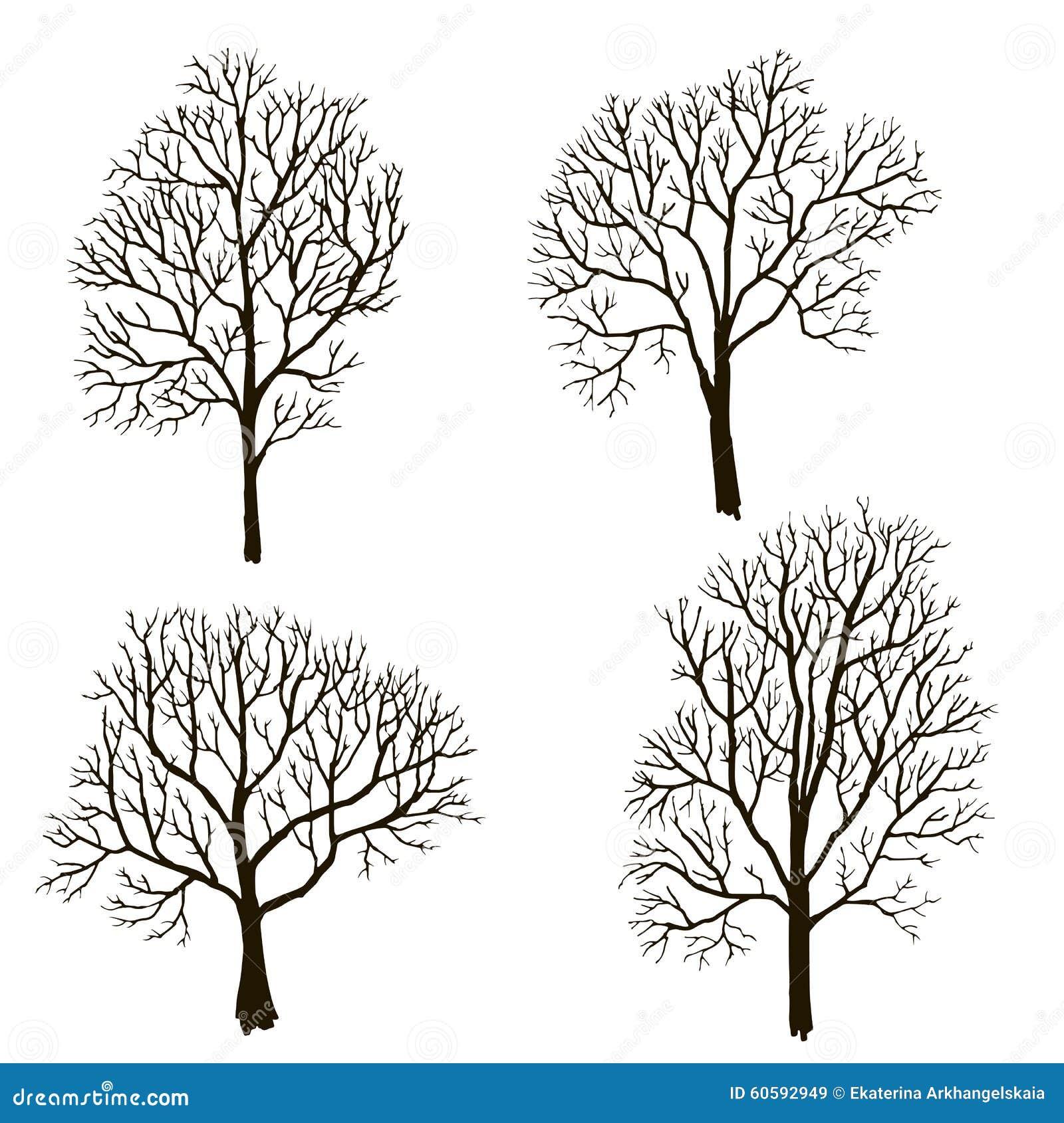 Arbres sans silhouette de feuilles illustration de vecteur - Arbres sans feuilles ...