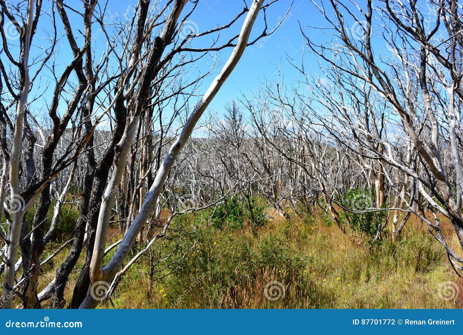 Arbres secs en parc national de Torres del Paine, Chili