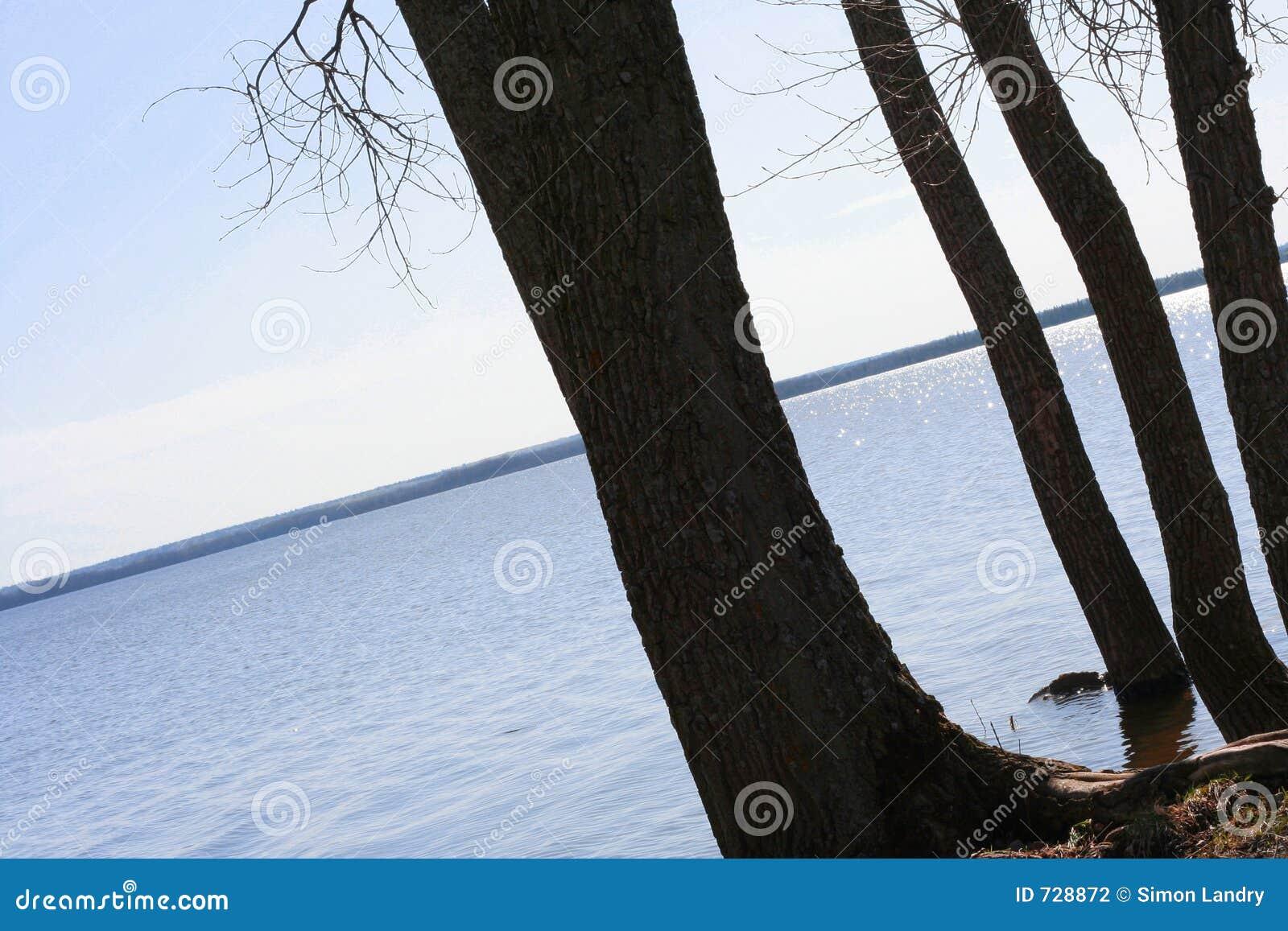 Arbres silhouettés de rive