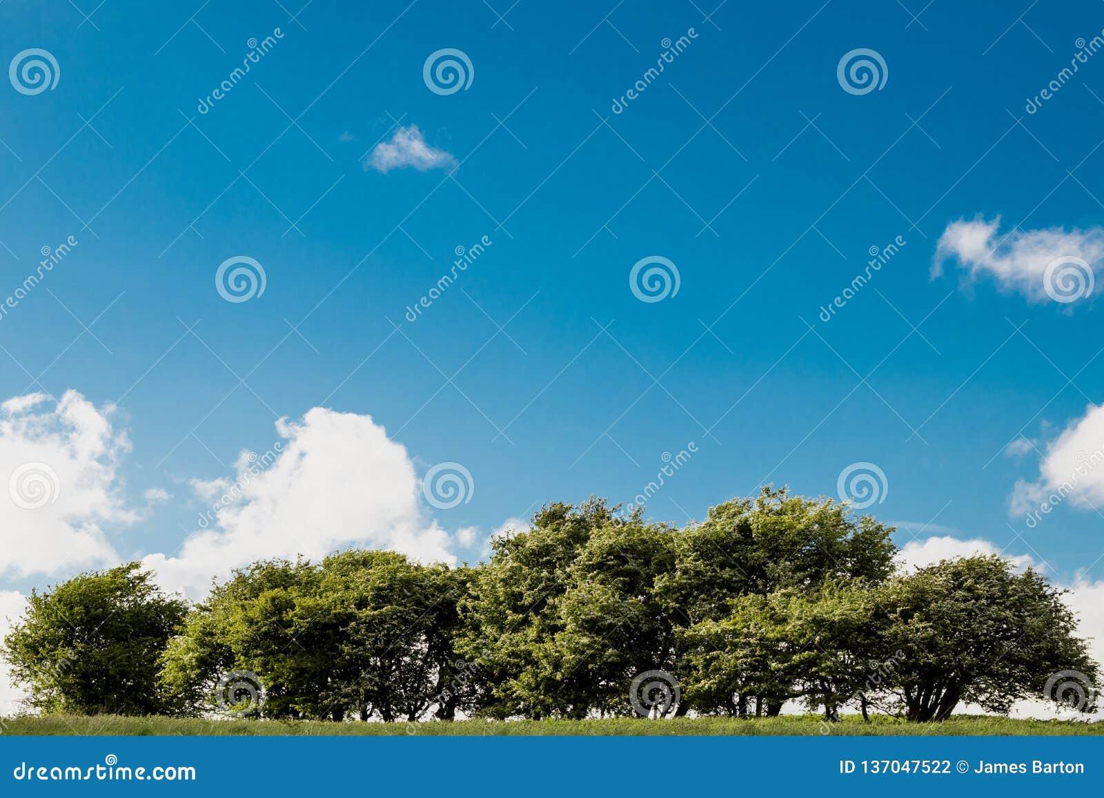 Arbres sur la colline avec le ciel bleu et les nuages un jour ensoleillé
