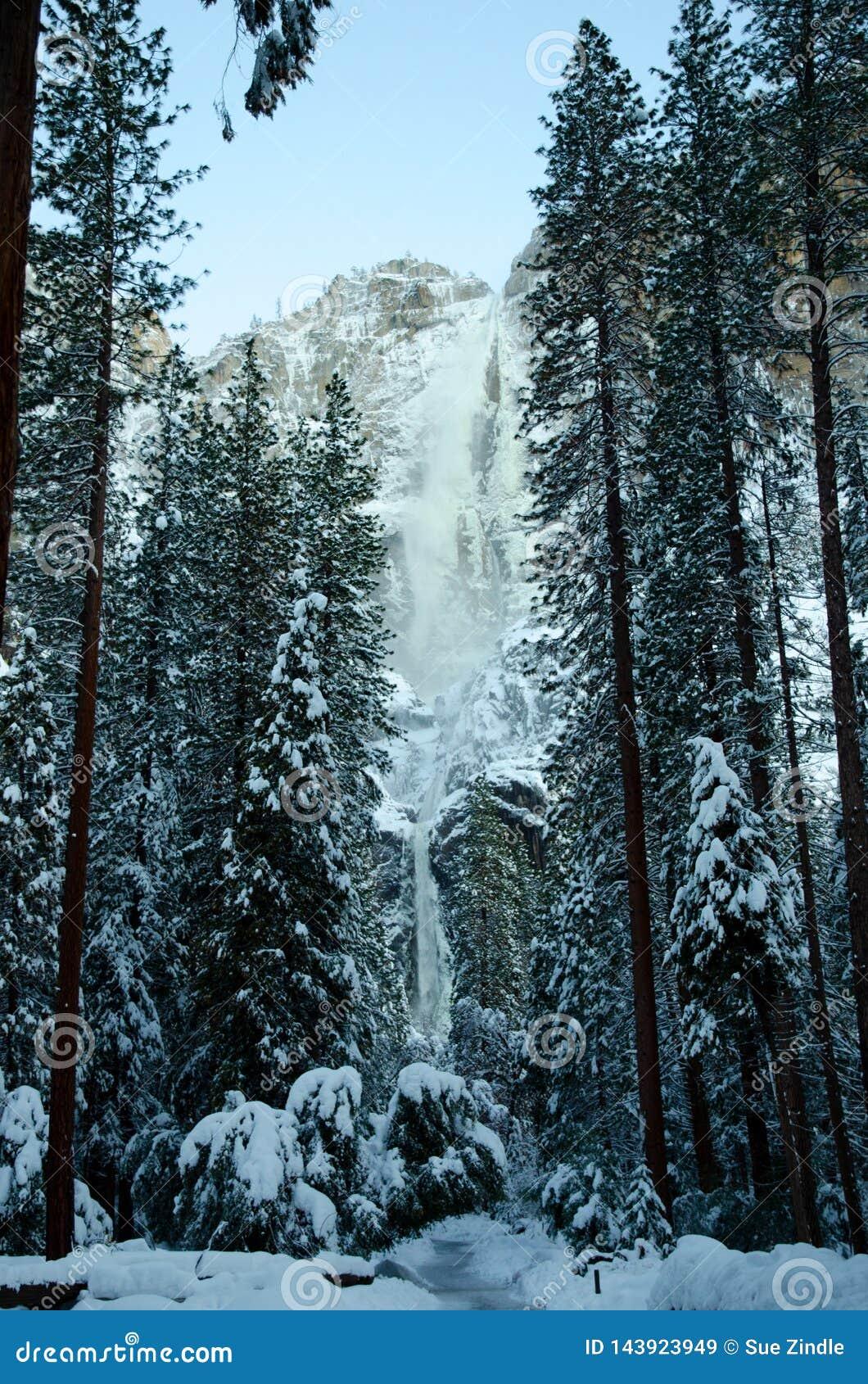 Arbres Yosemite Falls inférieur supérieur de Milou