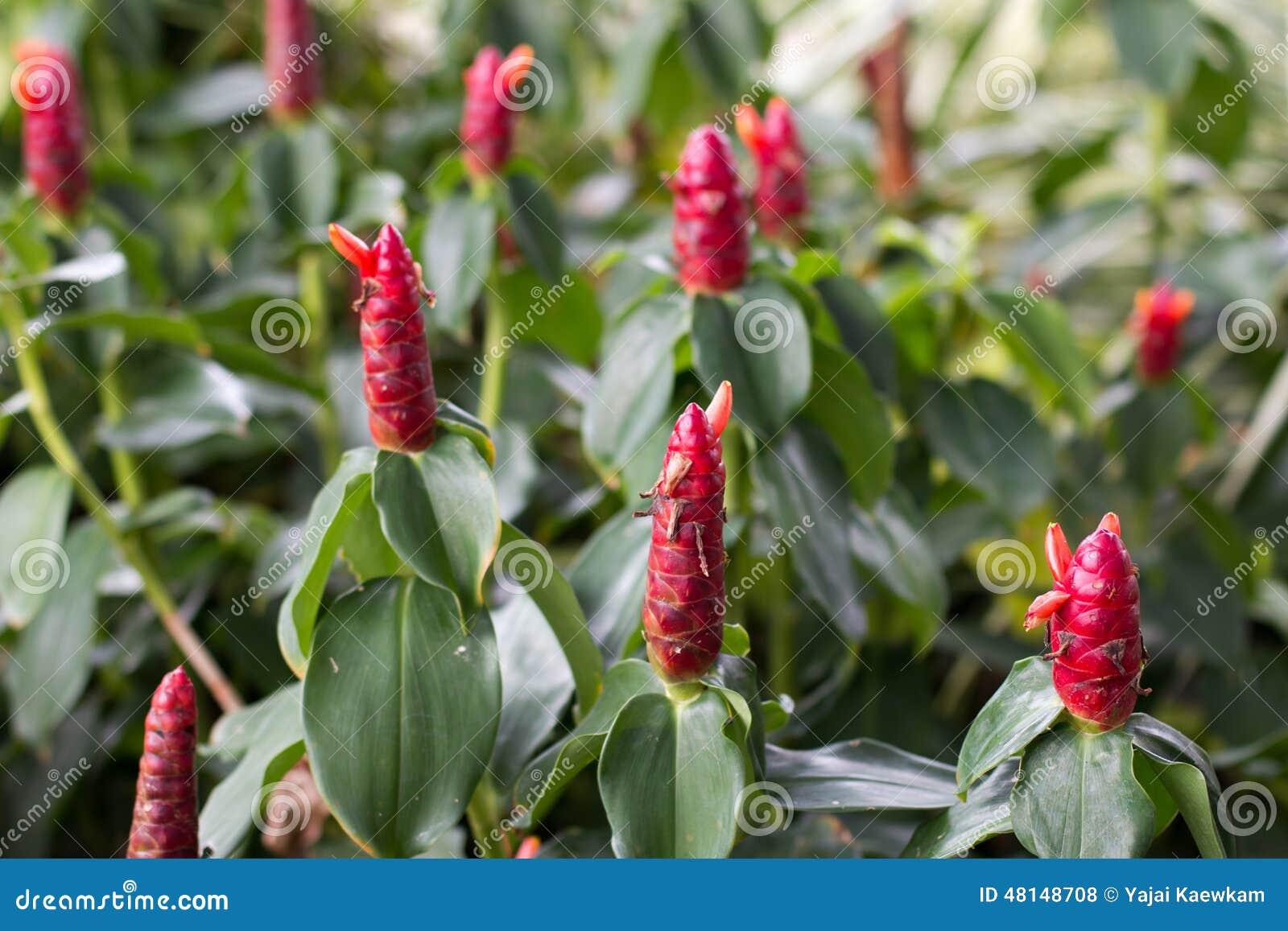 arbuste rouge de fleur photo stock image 48148708. Black Bedroom Furniture Sets. Home Design Ideas