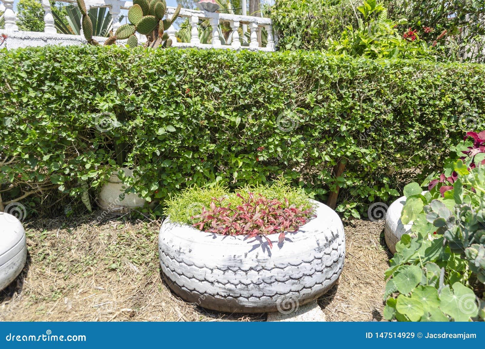 Arbuste se protégeant divisant le jardin d agrément