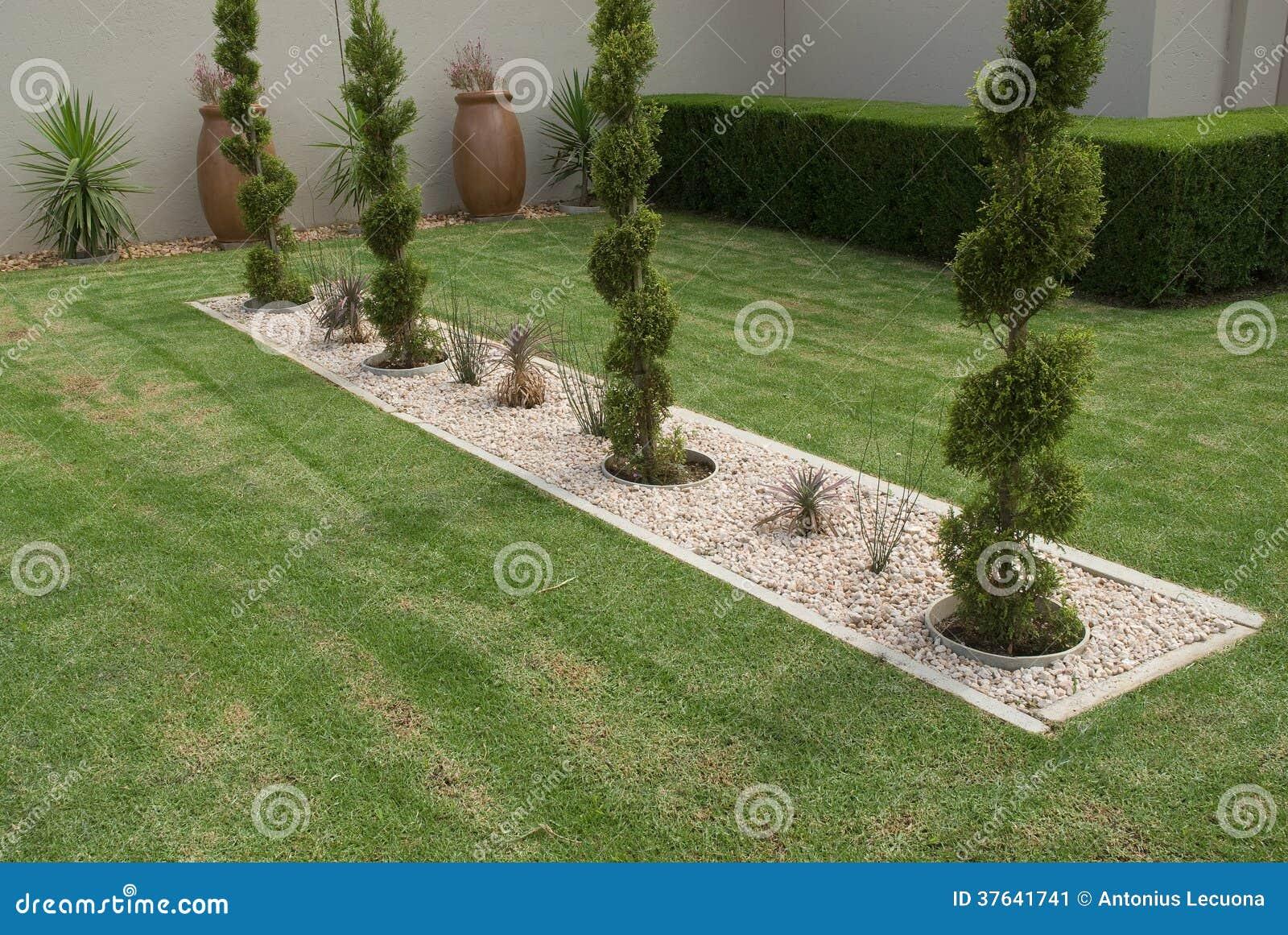 arbustes form s de conif re image stock image 37641741. Black Bedroom Furniture Sets. Home Design Ideas