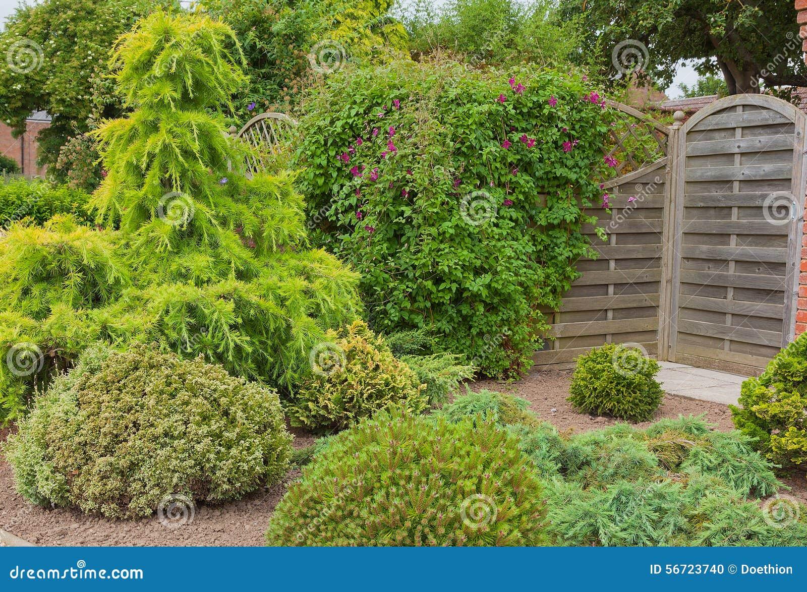 Arbusti ed alberi sempreverdi in un angolo del giardino - Alberi giardino sempreverdi ...