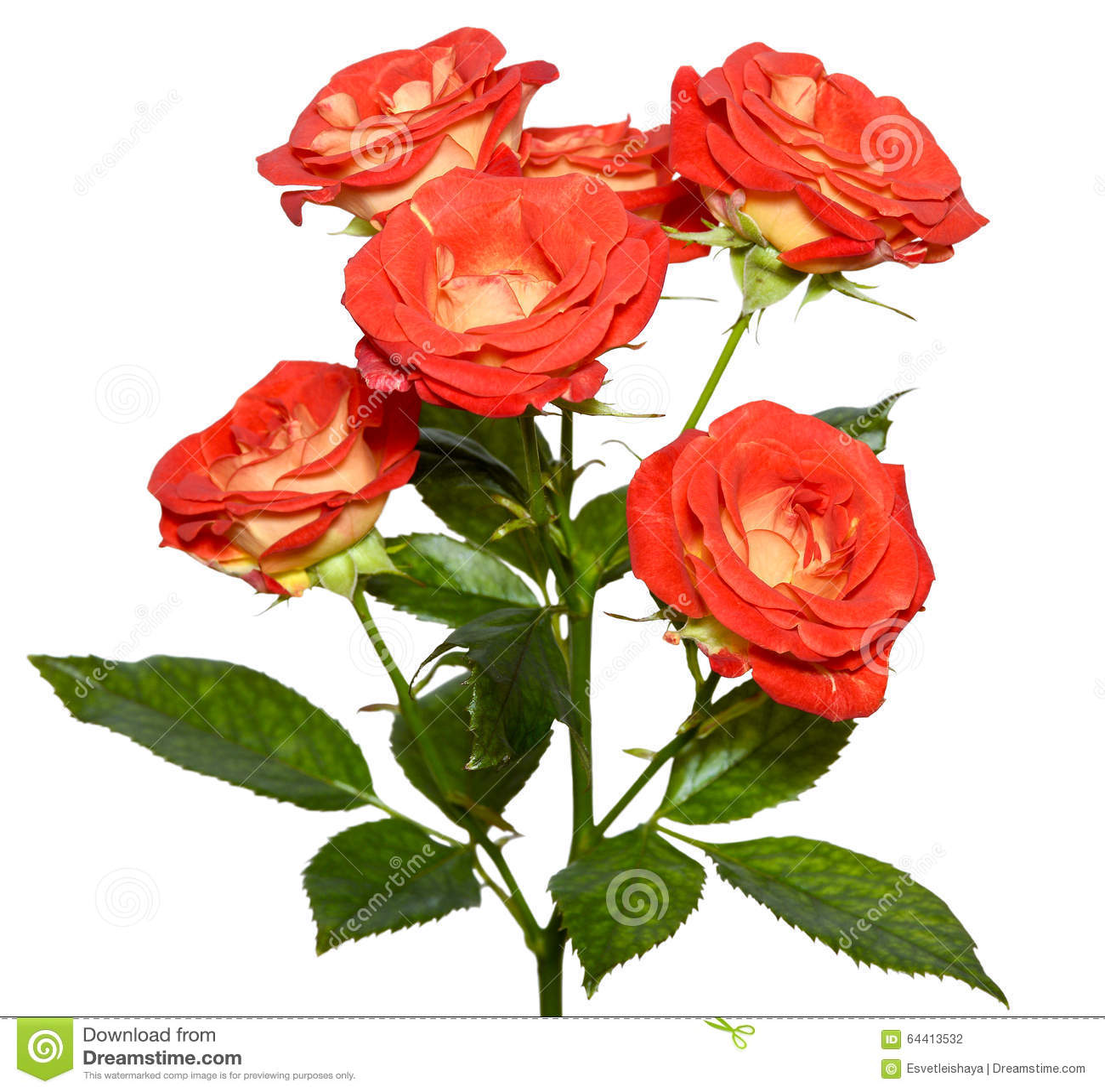Arbusto color de rosa anaranjado