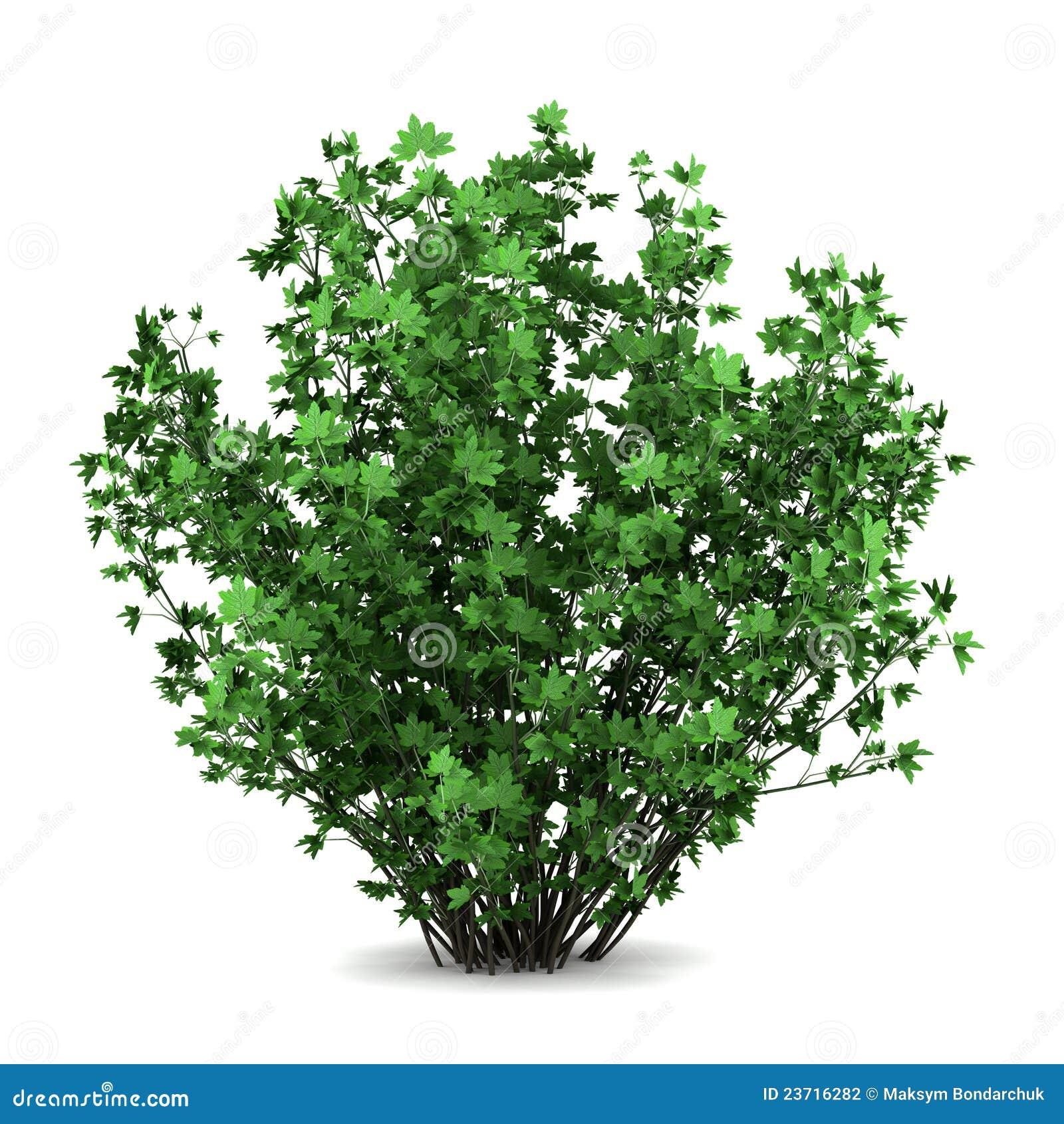Resultado de imagen de Arbusto