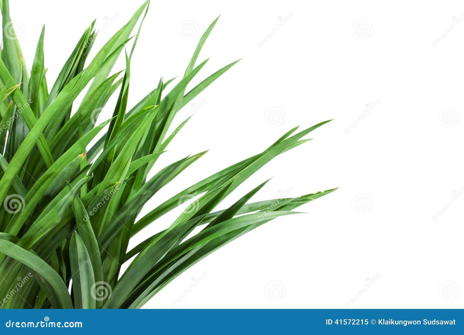 Anclaje en el fondo de la hierba
