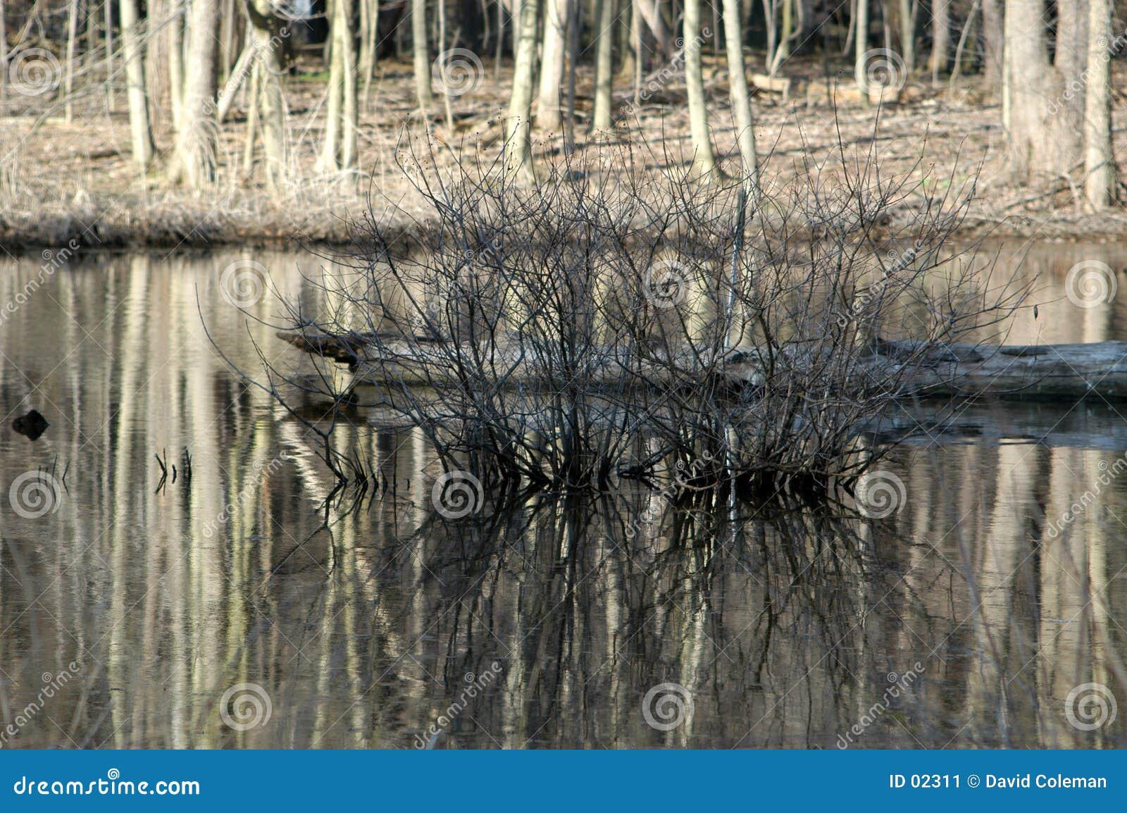 Arbusto desencapado na lagoa