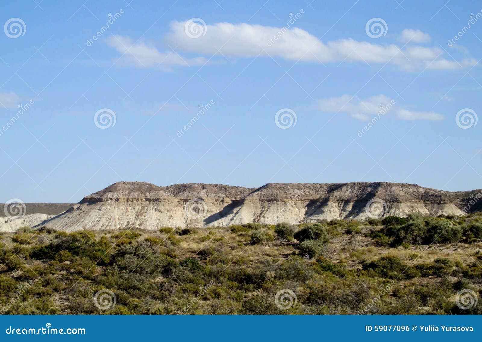 Arbusto do deserto e penhasco branco no litoral