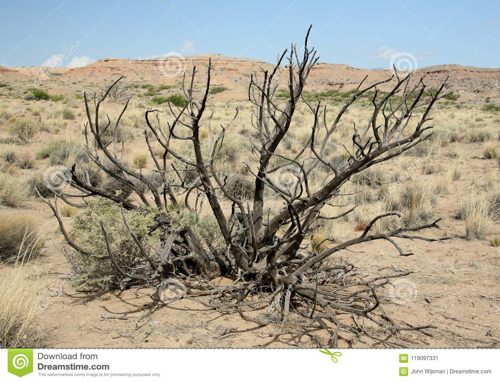 Arbusto Muerto Con Las Ramas Desnudas En El Desierto De New México ...