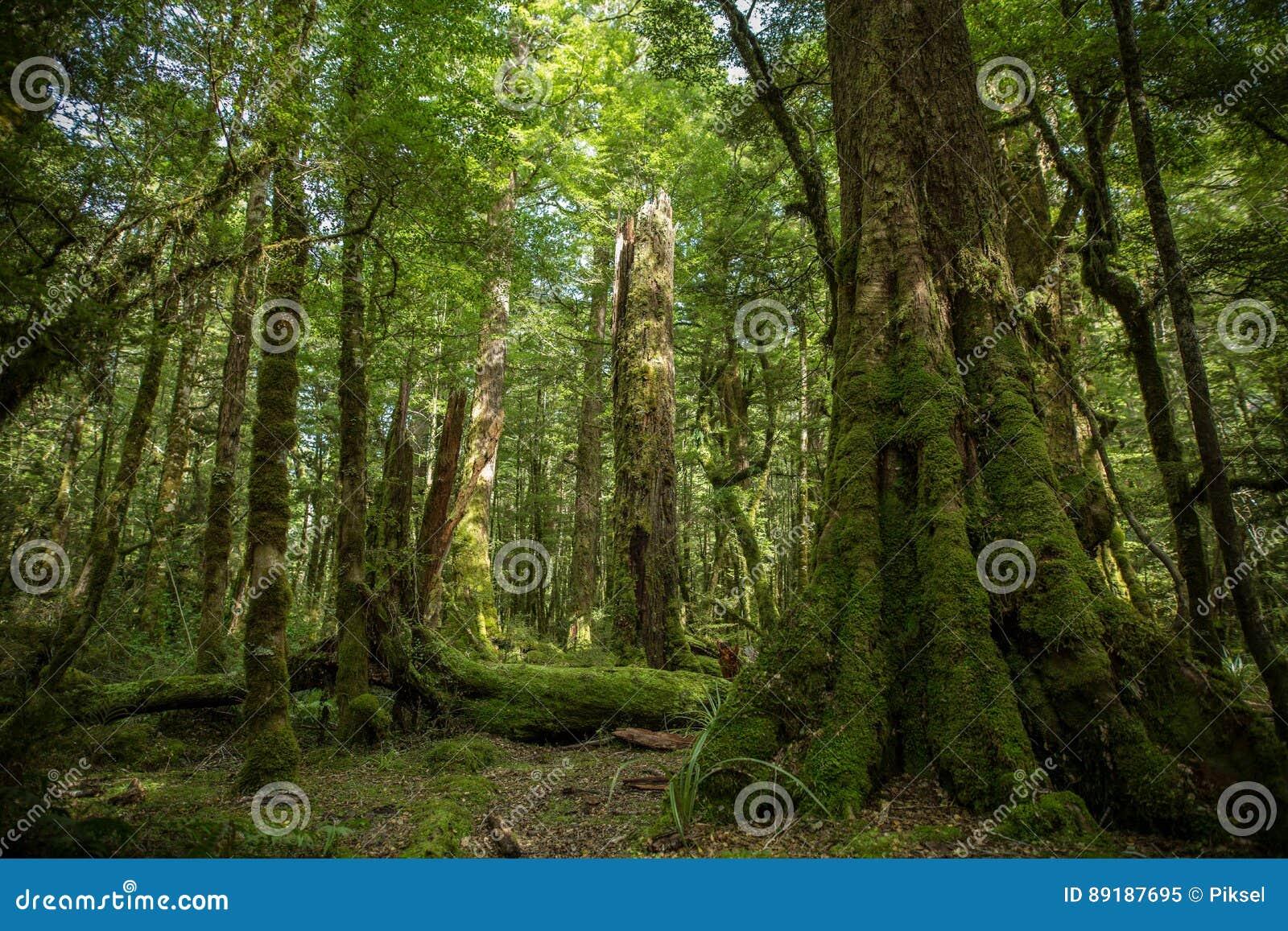 Arbusto nativo, Nova Zelândia