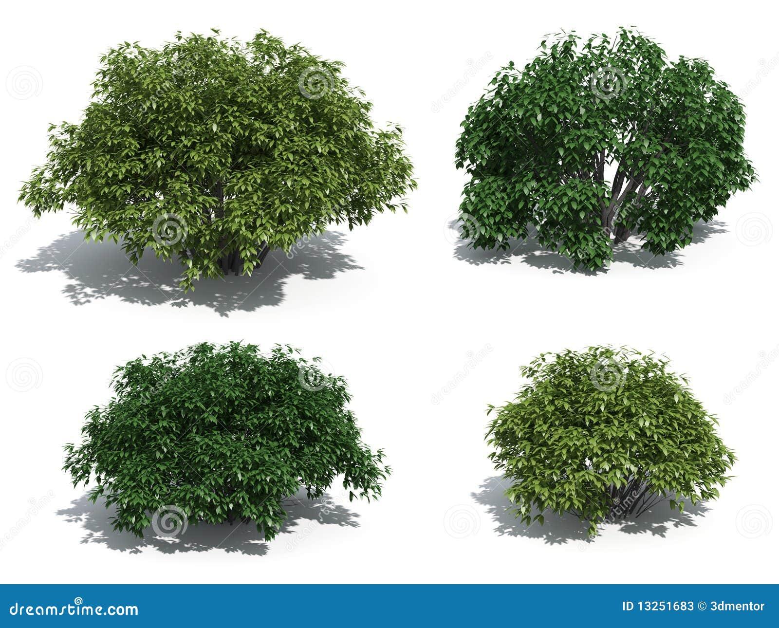 Arbustos ilustra o stock ilustra o de branco grupo - Nombres de arbustos ...