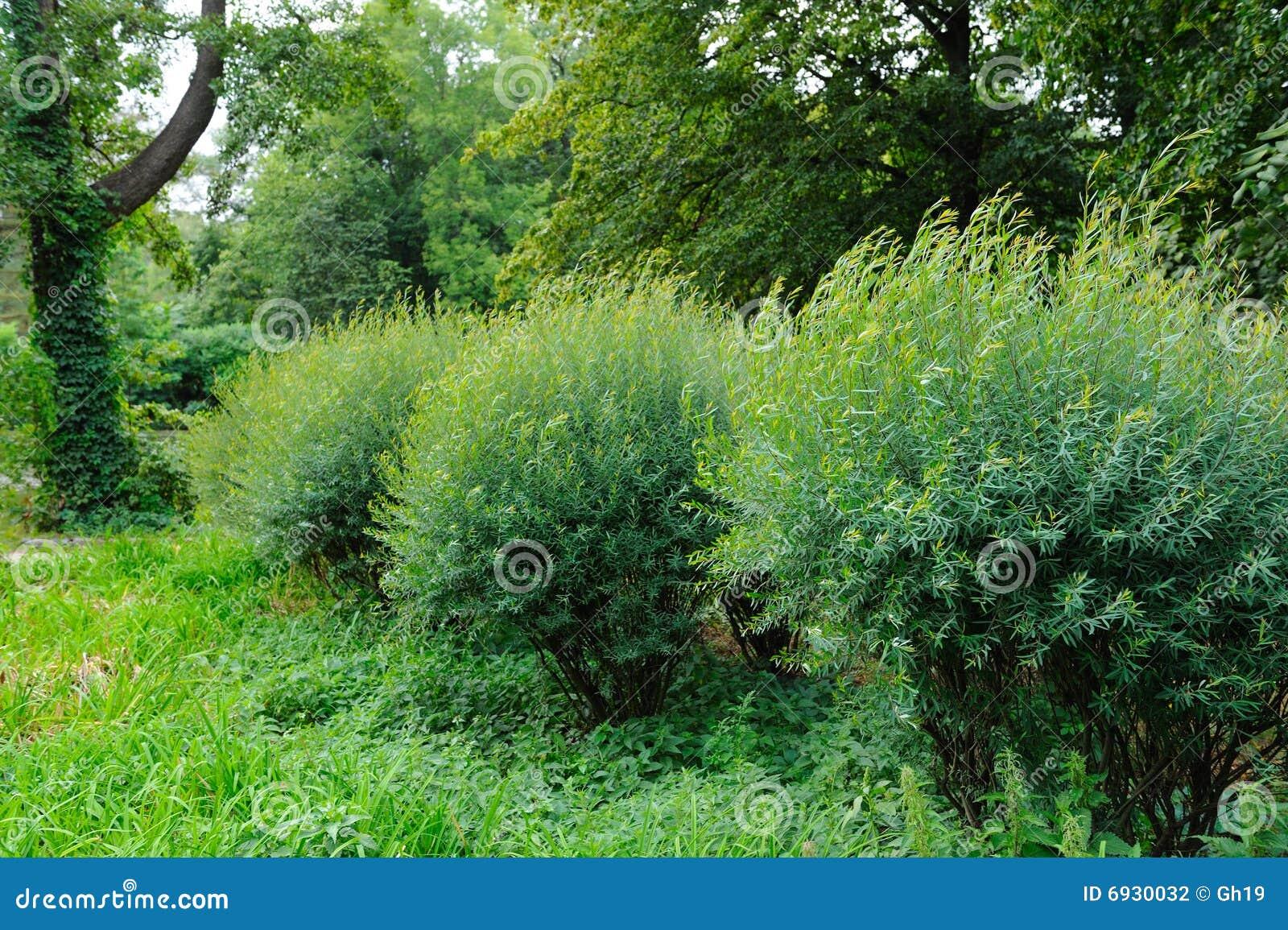 Fotos gratis de arbustos maduros