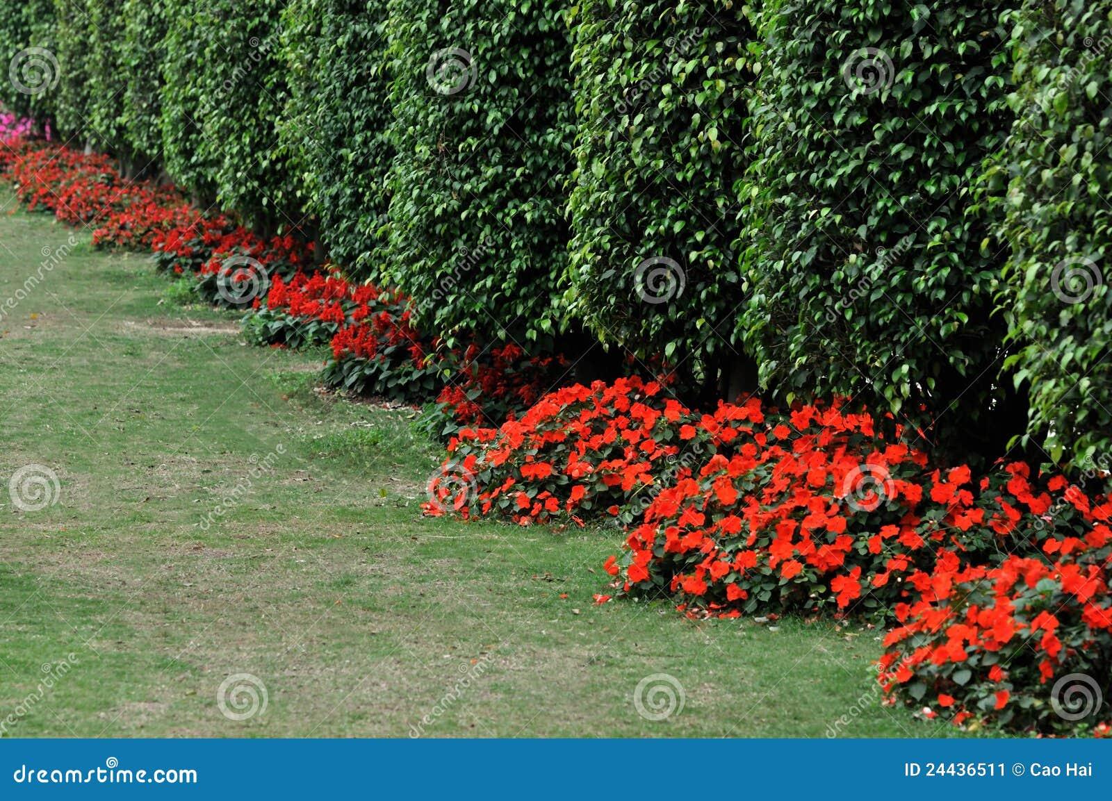 Arbustos como a parede na linha imagem de stock imagem for Arbustos con flores