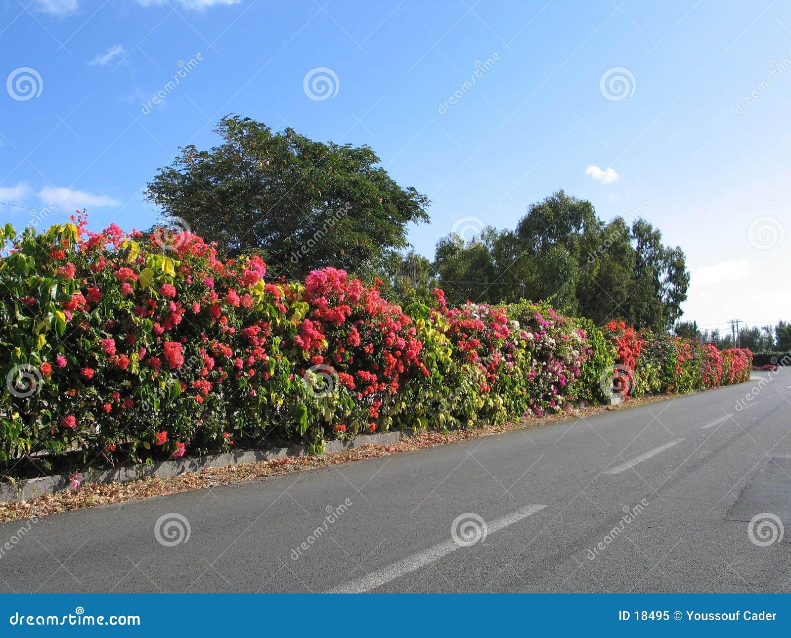 Arbustos da beira