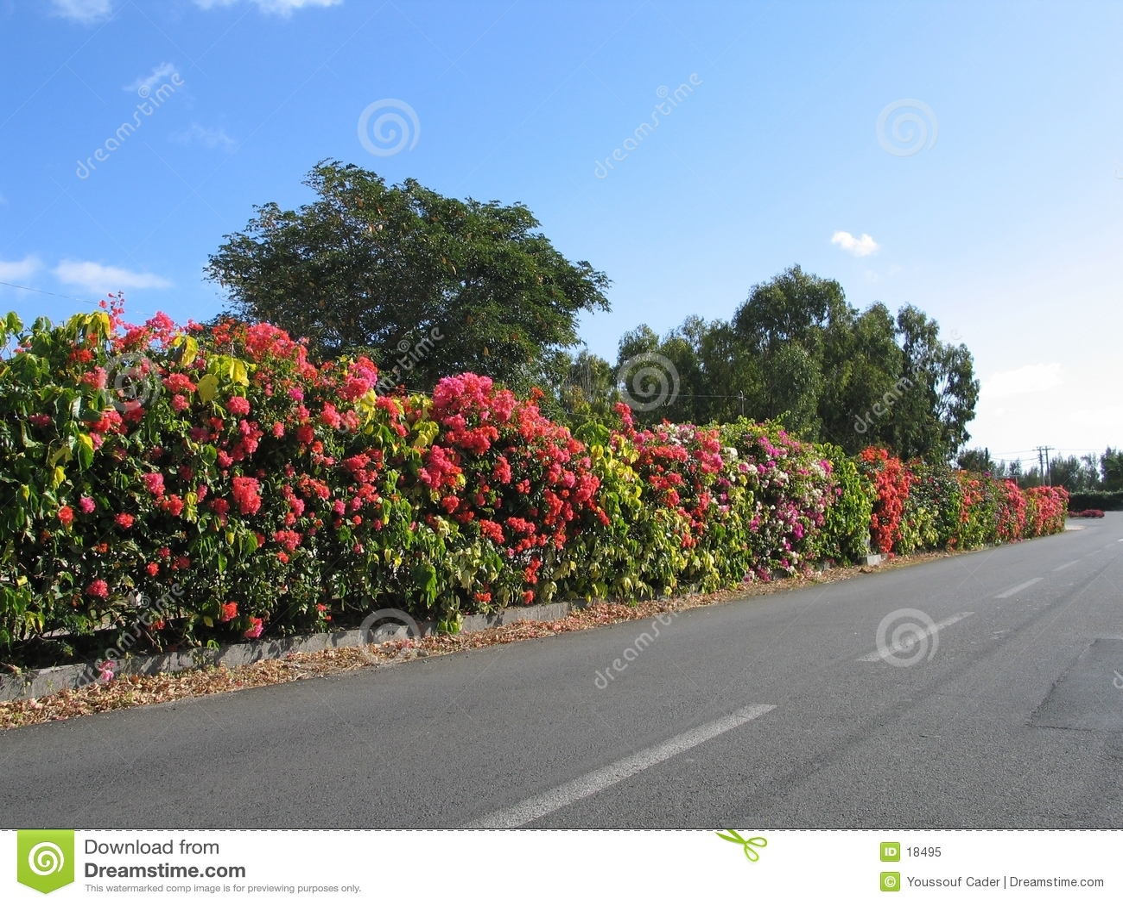 Arbustos de la frontera