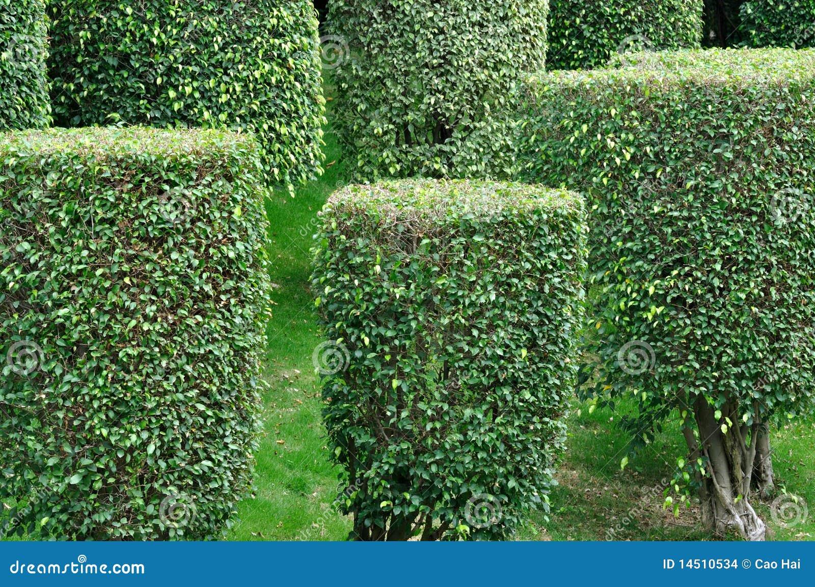 Arbustos formados en planta de jard n for Arbustos de jardin