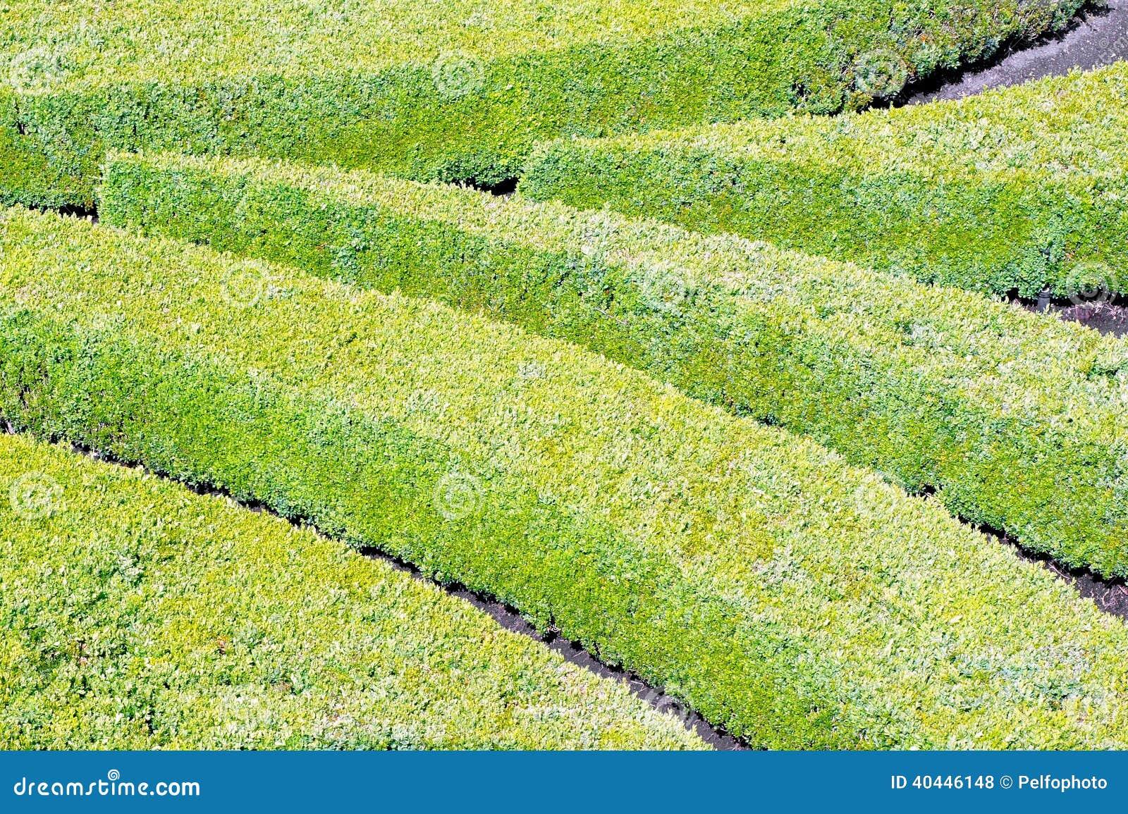 Arbustos ornamentales for Arbustos de jardin