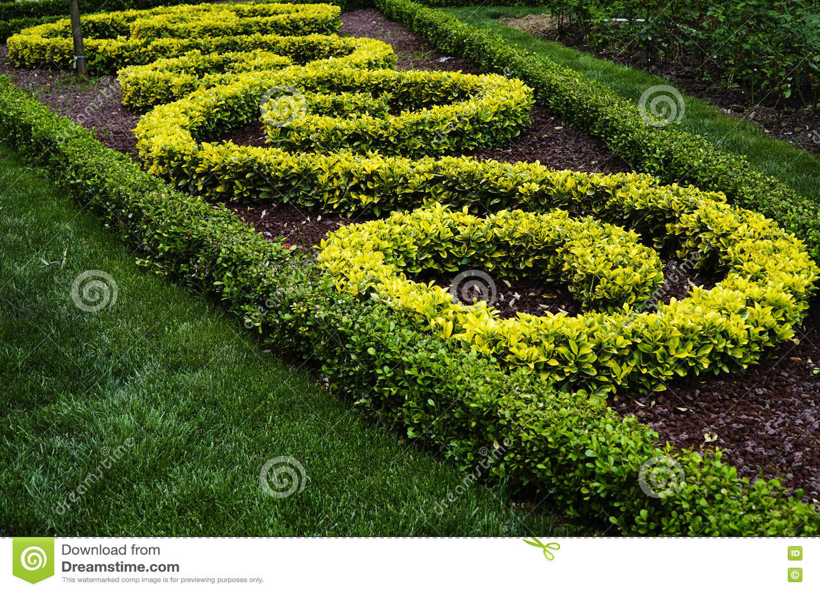 Arbustos ornamentales en un parque imagen de archivo for Arbustos ornamentales