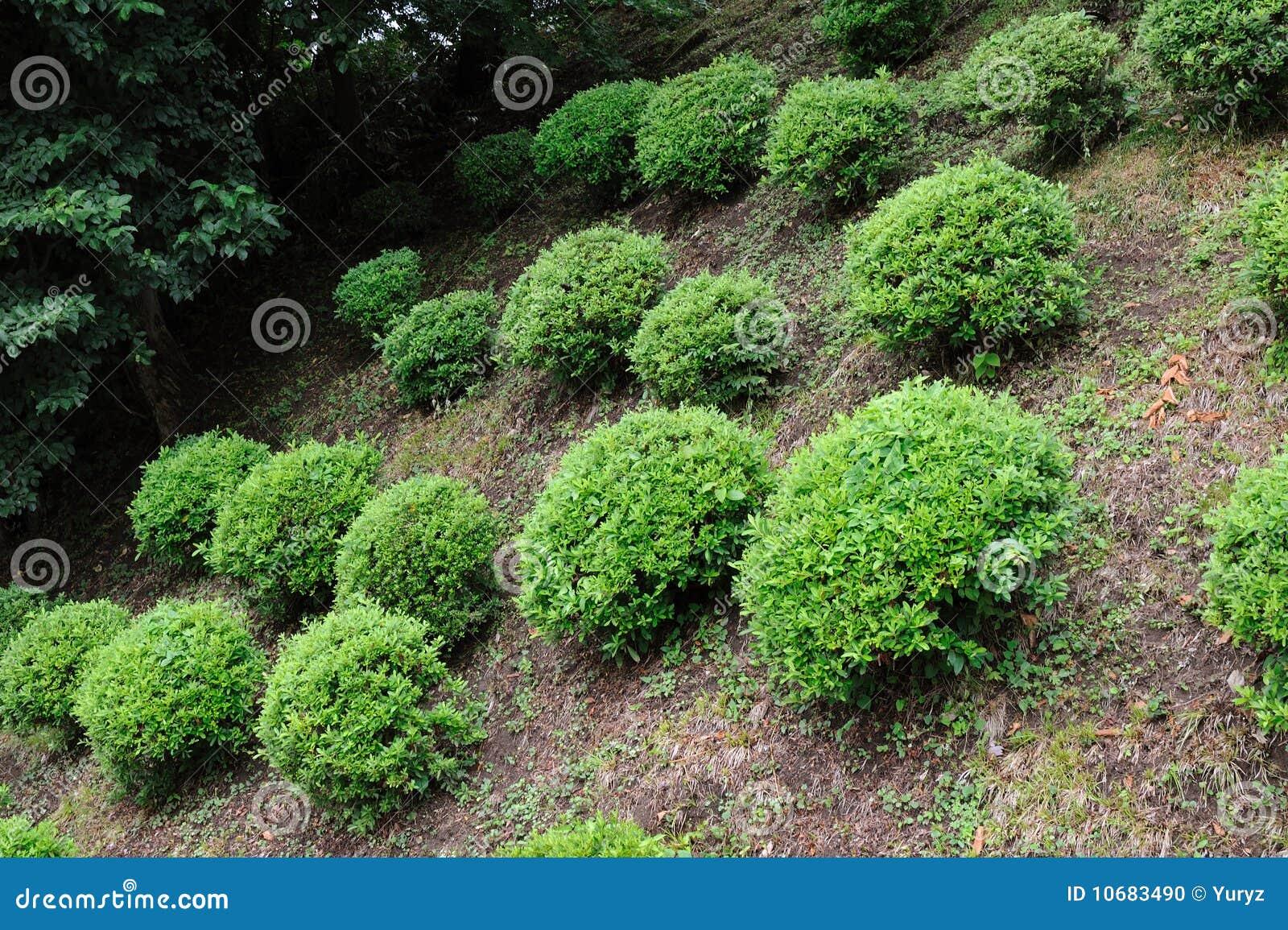 arbustos pequenos foto de stock imagem 10683490