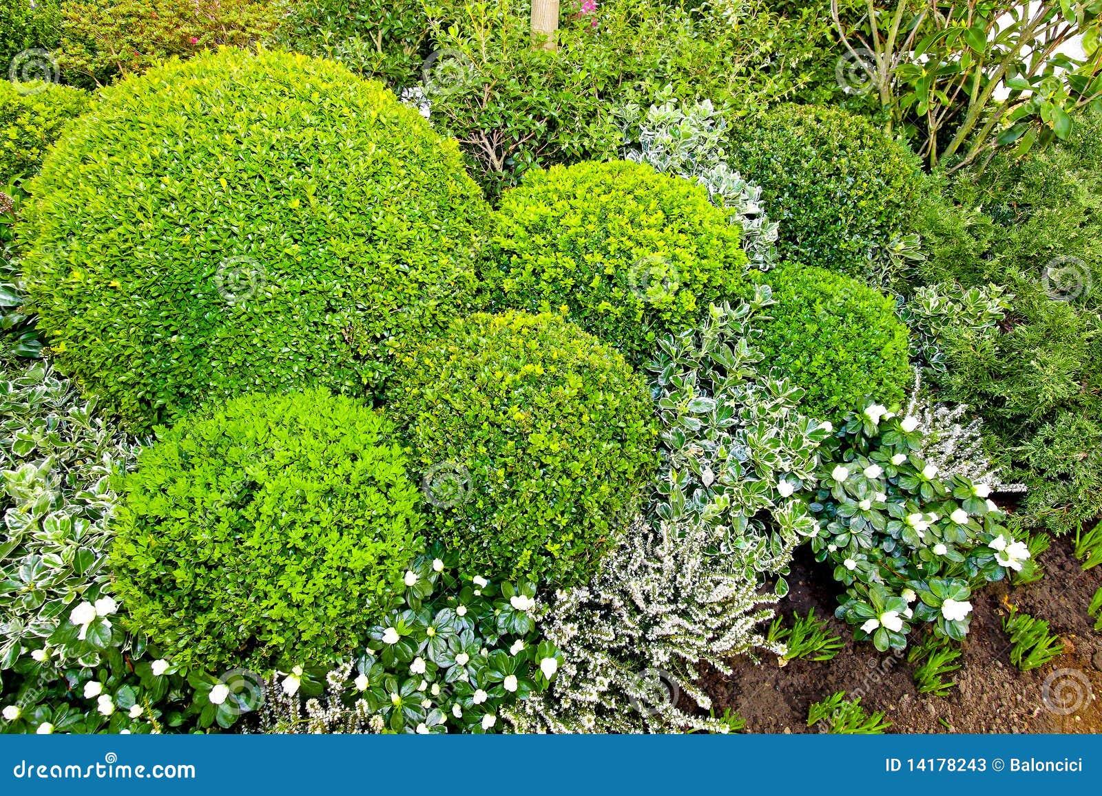 Arbustos verdes fotos de stock imagem 14178243 for Arbustos de jardin fotos