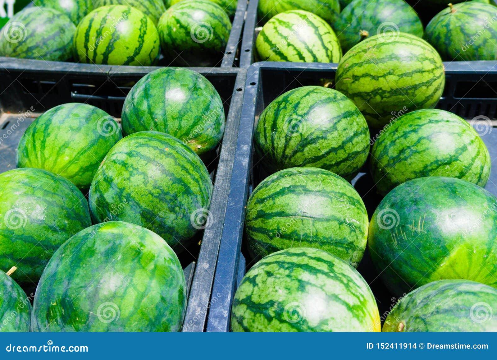 Arbuz sprzedający przy organicznie rynkiem
