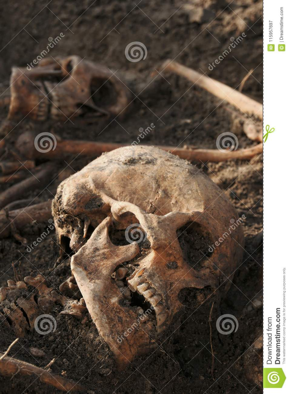Human remains excavated: close up of two skeletons with skulls