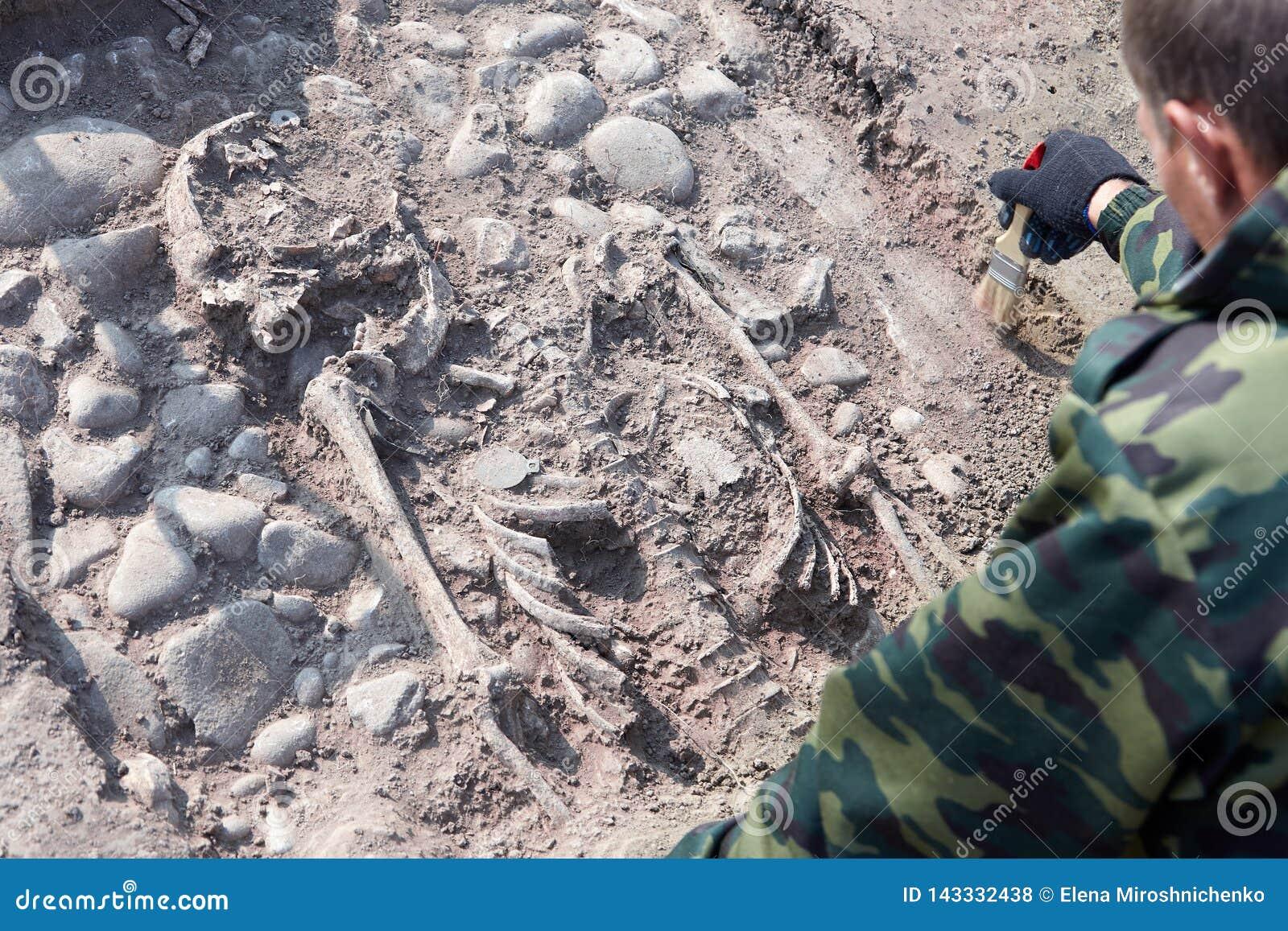 Archaeological utgrävning Händerna av arkeologen med hjälpmedel som för forskning på mänskliga ben, del av skelettet från groen