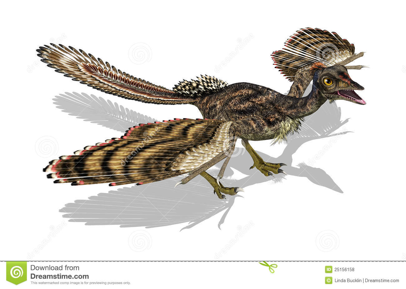 Archaeopteryx - Prehistoric Bird Royalty Free Stock Photos - Image ... Archaeopteryx Not A Transitional Form