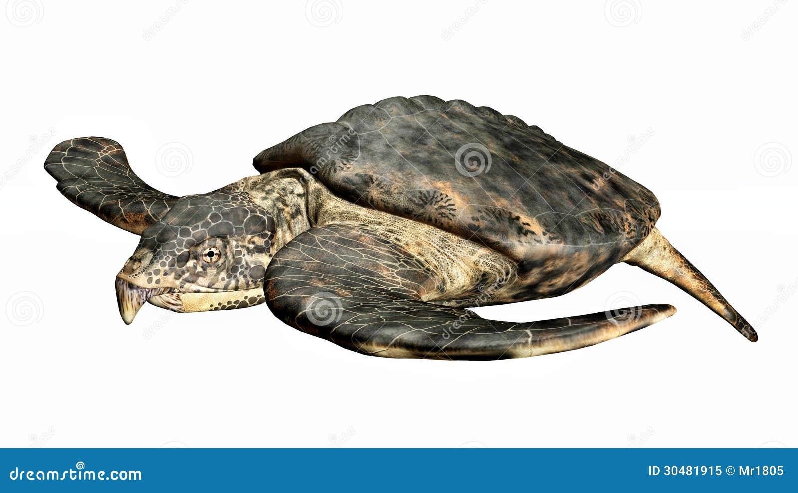 Giant sea turtle prehistoric