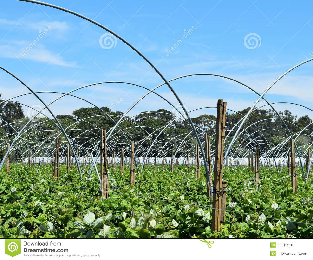 Architectural Patterns Of Greenhouse Arches Stock Photo - Image of